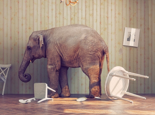 The elephant in the room -