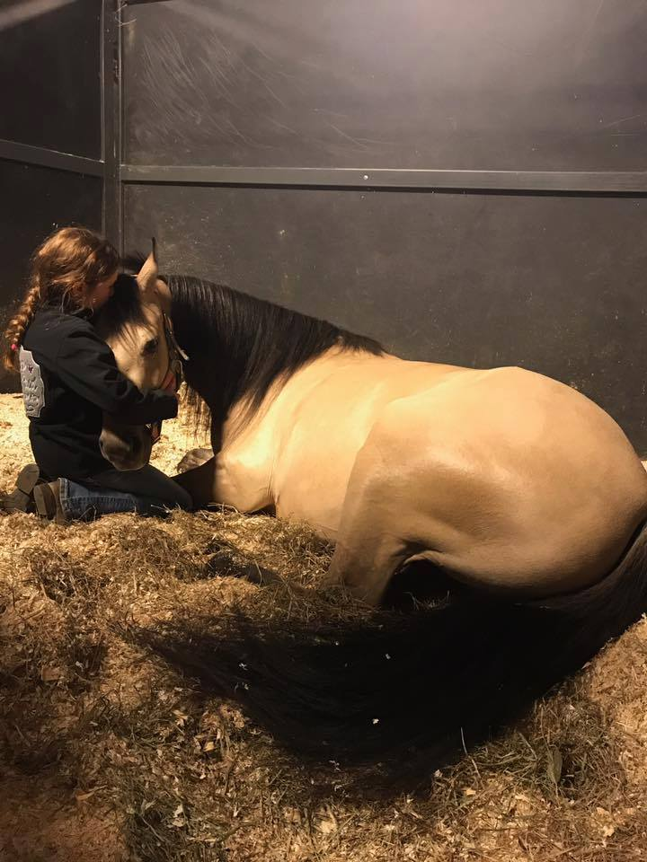 """The Original """"Good Dun"""" aka Roxy with her youth jockey in her new home. This picture is exactly what we represent. Good horses, of sound mind matched with the perfect family."""