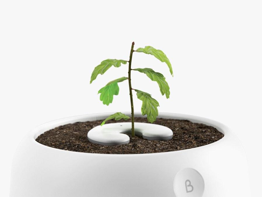 De  Bios Urn  is een heel nieuw concept in de after life cycle.