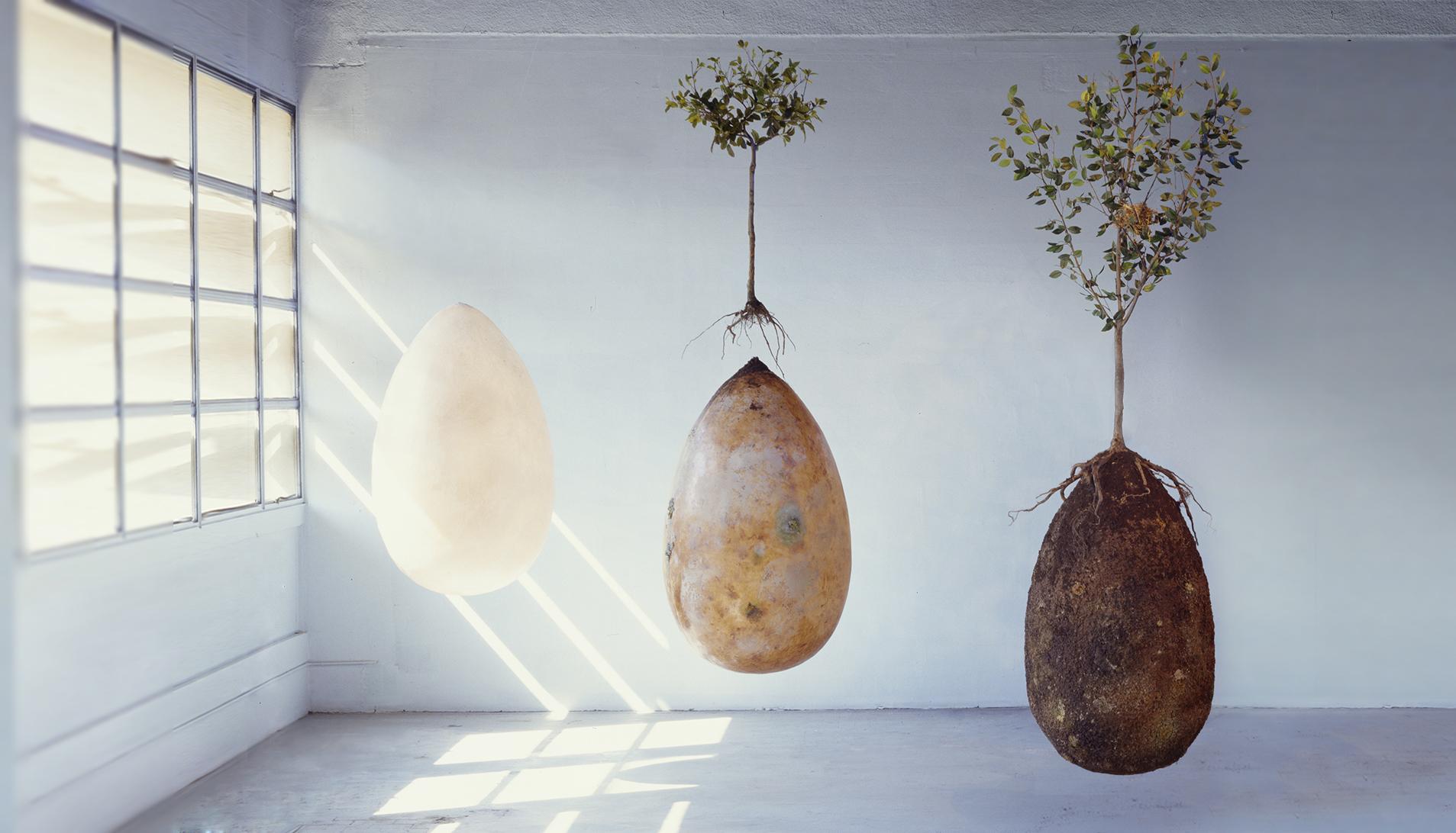 Een boom worden -