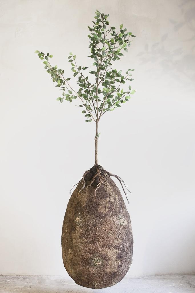 Een boom worden - Wat als je na je dood kunt opgaan in nieuw leven? Namelijk als boom? De Bios Urn uit Spanje en de Capsula Mundi uit Italië brengen een revolutie op gang ten aanzien van wat we achterlaten op deze planeet.