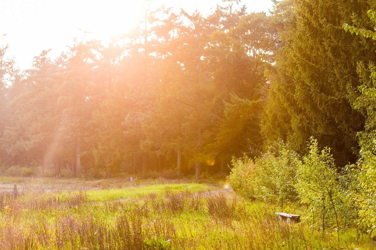 Natuurbegraafplaats Heidepol, midden op de Veluwe