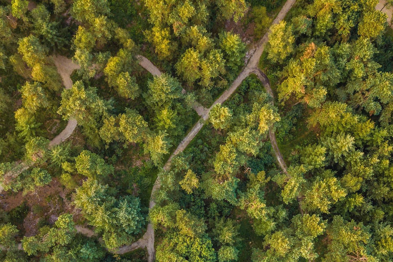 Natuurbegraven -