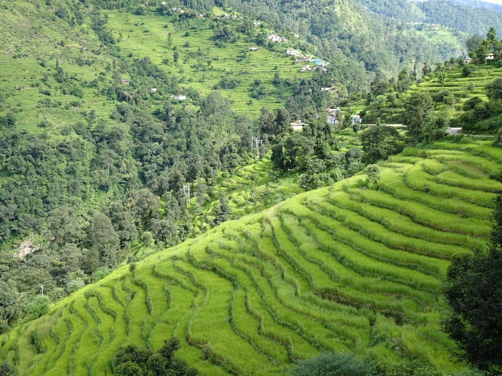 Green Himalayas