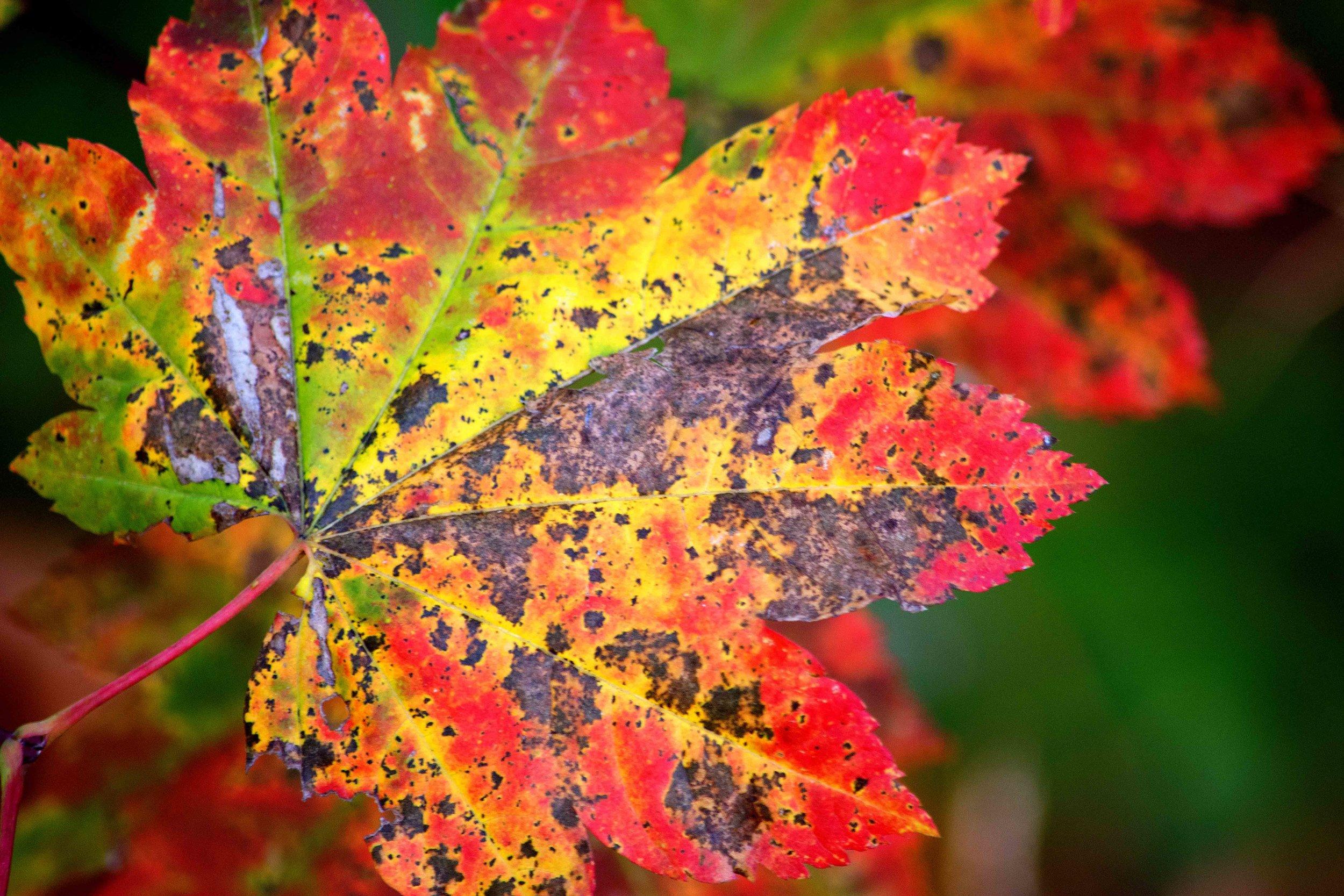 Autumn 2018_03_FB_Banner.jpg