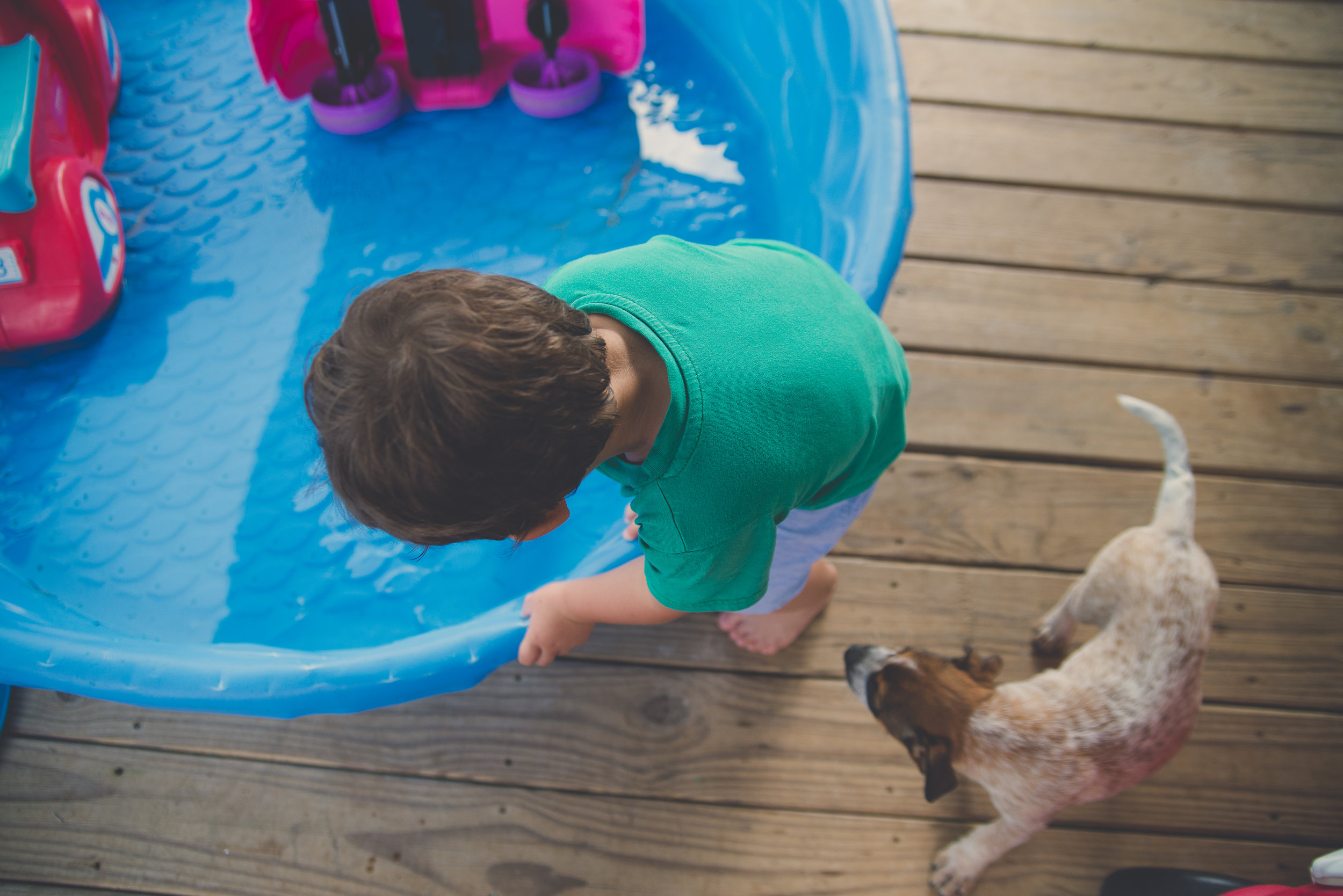 toddler boy getting into swimming pool while puppy follows