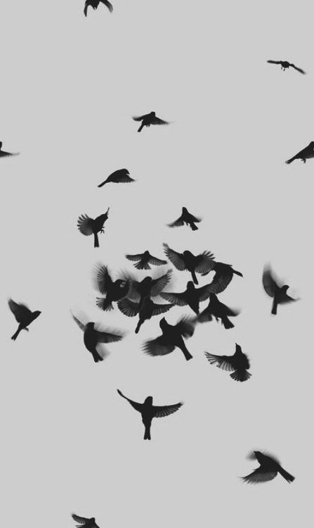b40546768a5339cadd3a5149e4936c7e--black-phone-wallpaper-black-bird-tattoo.jpg