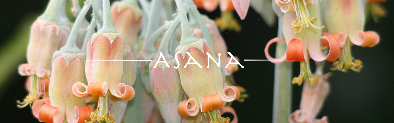 asana_banner.jpg
