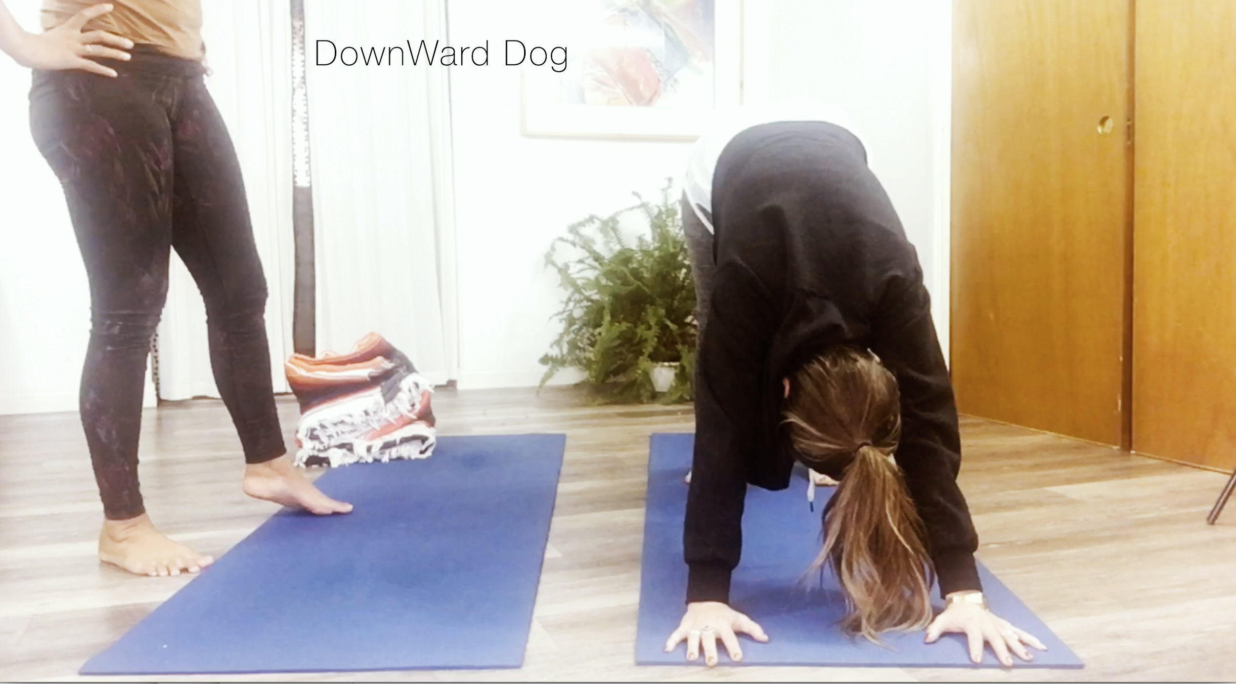 Downdog.jpg