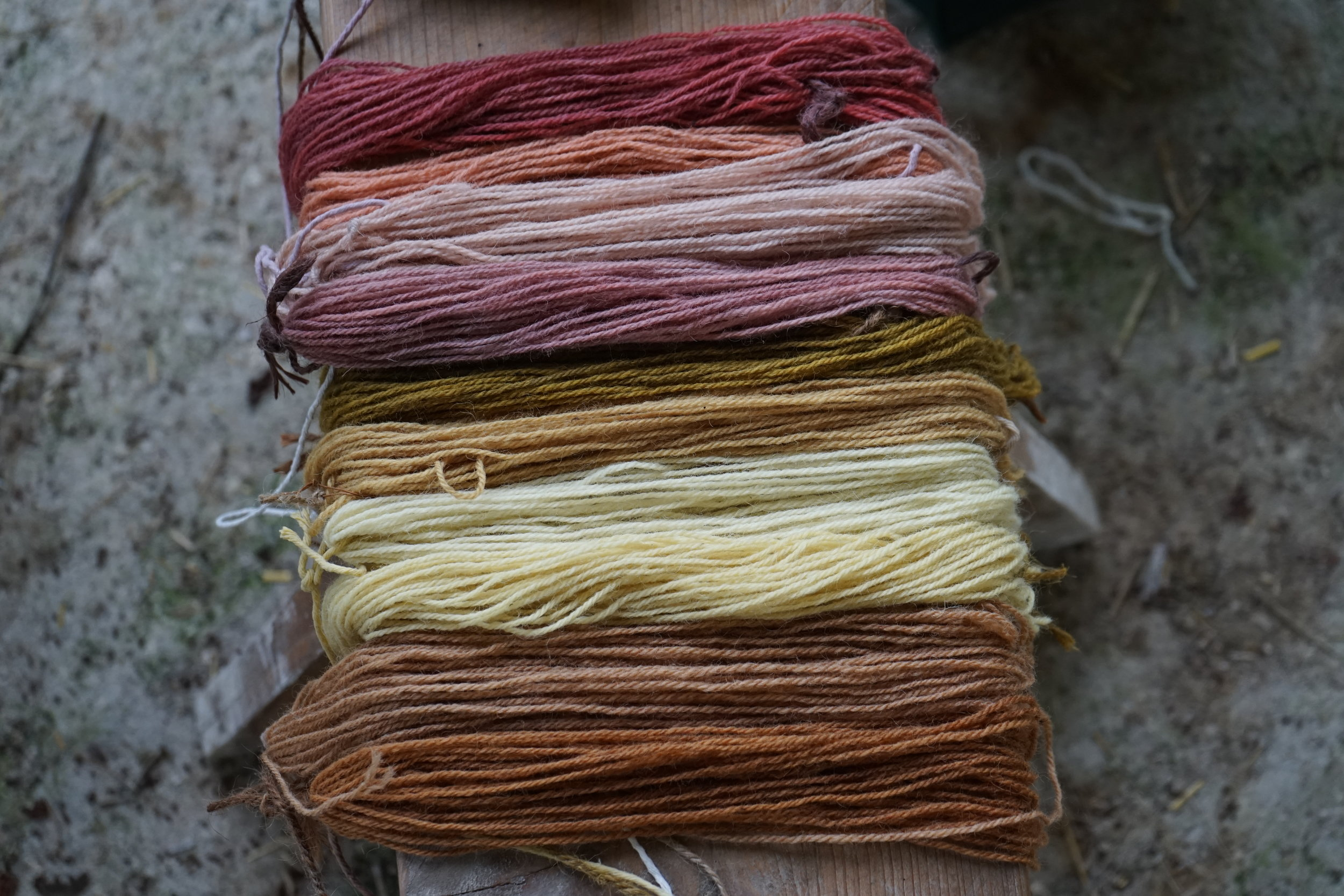 Hedgerow Dyeing colours 2017