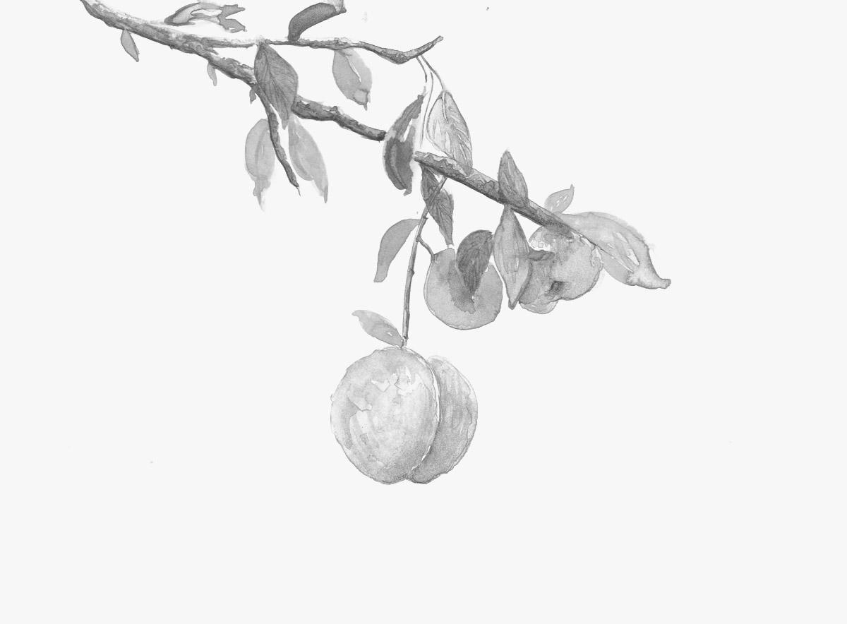Chikae-O.H._Featured-Landscape_watercolour-peaches-1.jpg