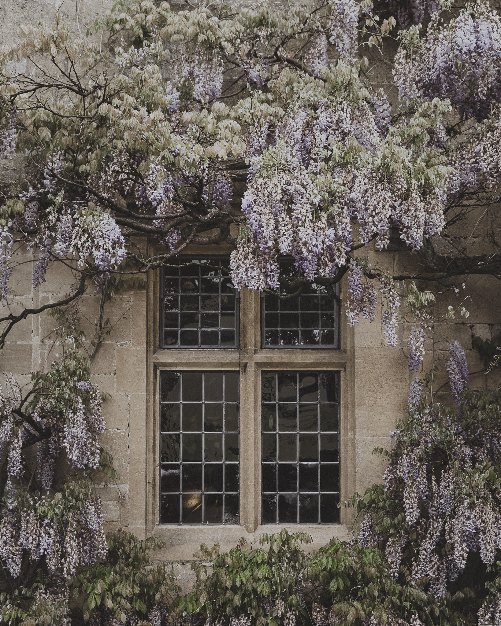 May Favourites - Wisteria at The Lygon Arms