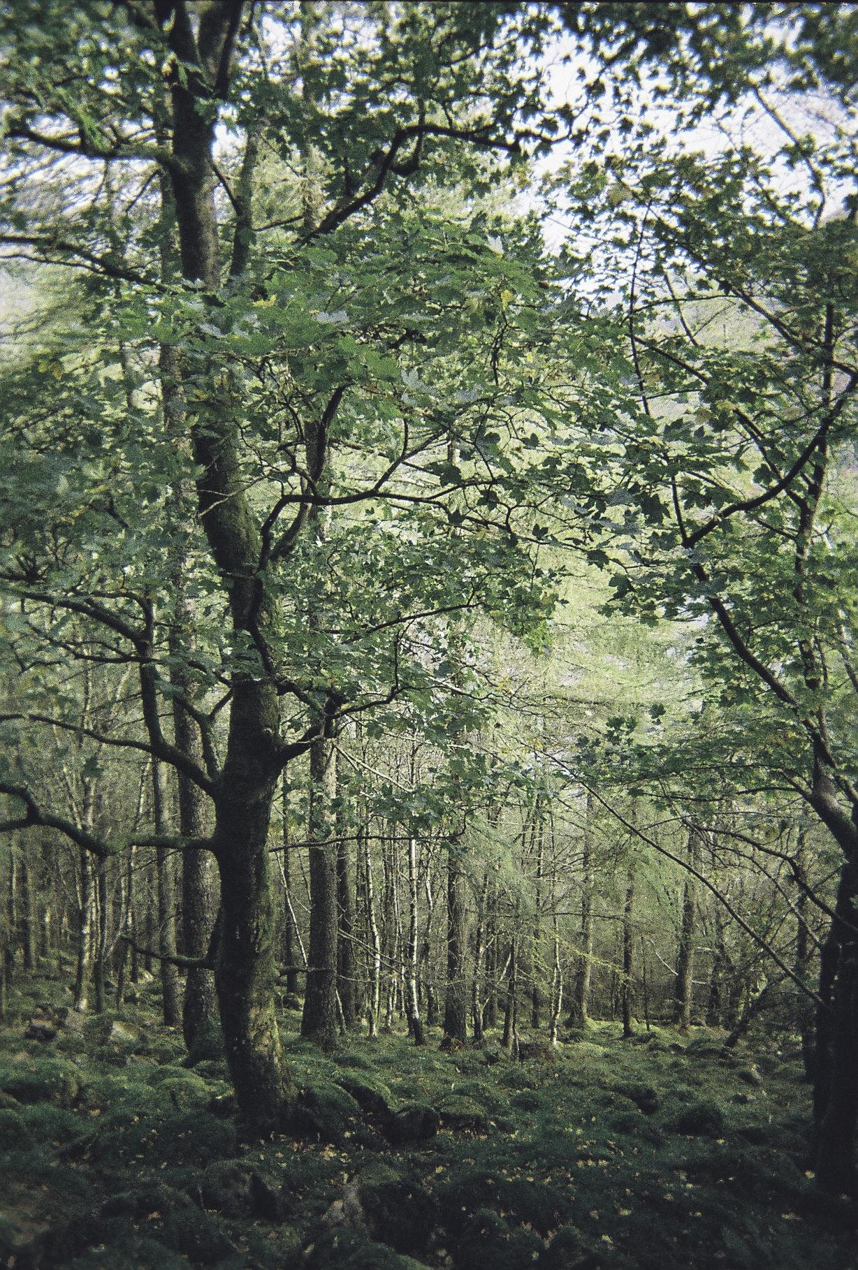 Downhill Woodland.jpg