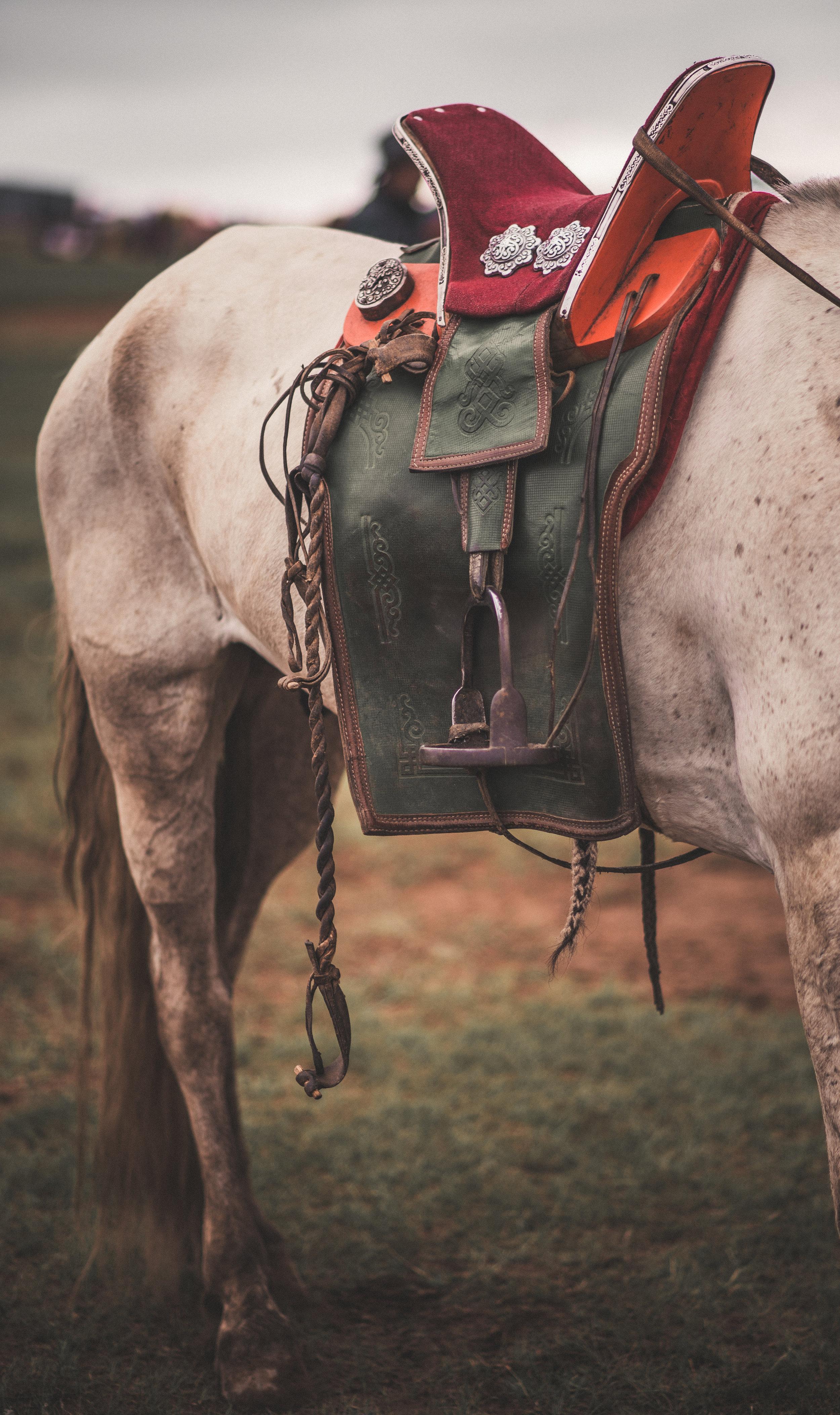 HorseRacing1 copy.jpg