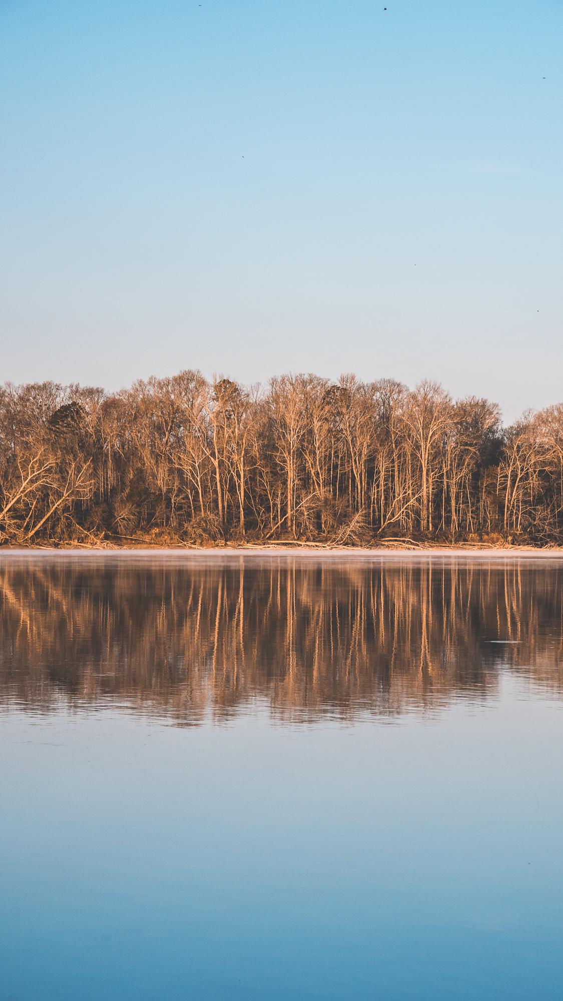 River Trees.jpg