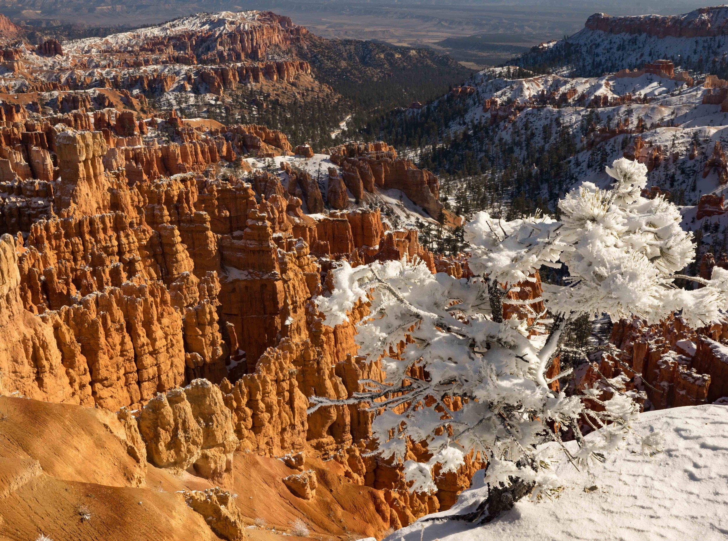 Bryce Canyon_-13.jpg