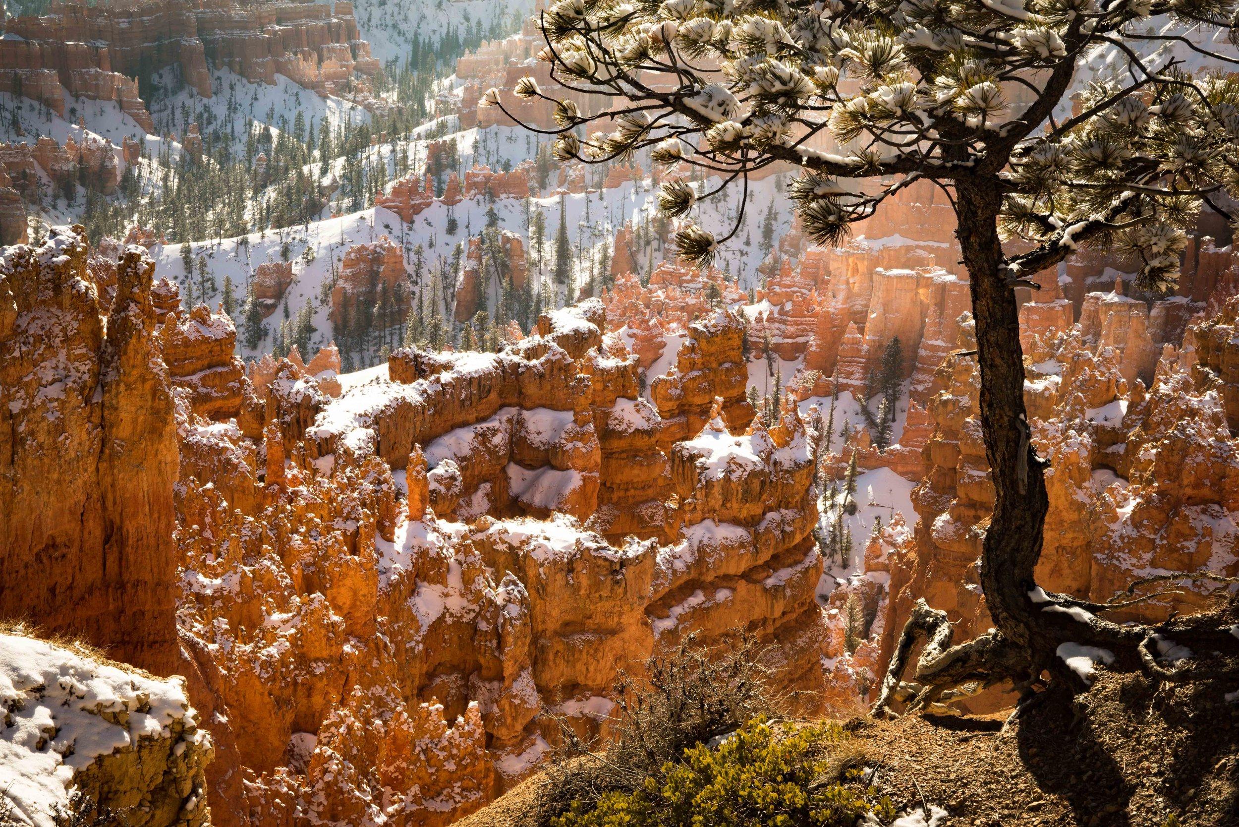 Bryce Canyon_-16.jpg