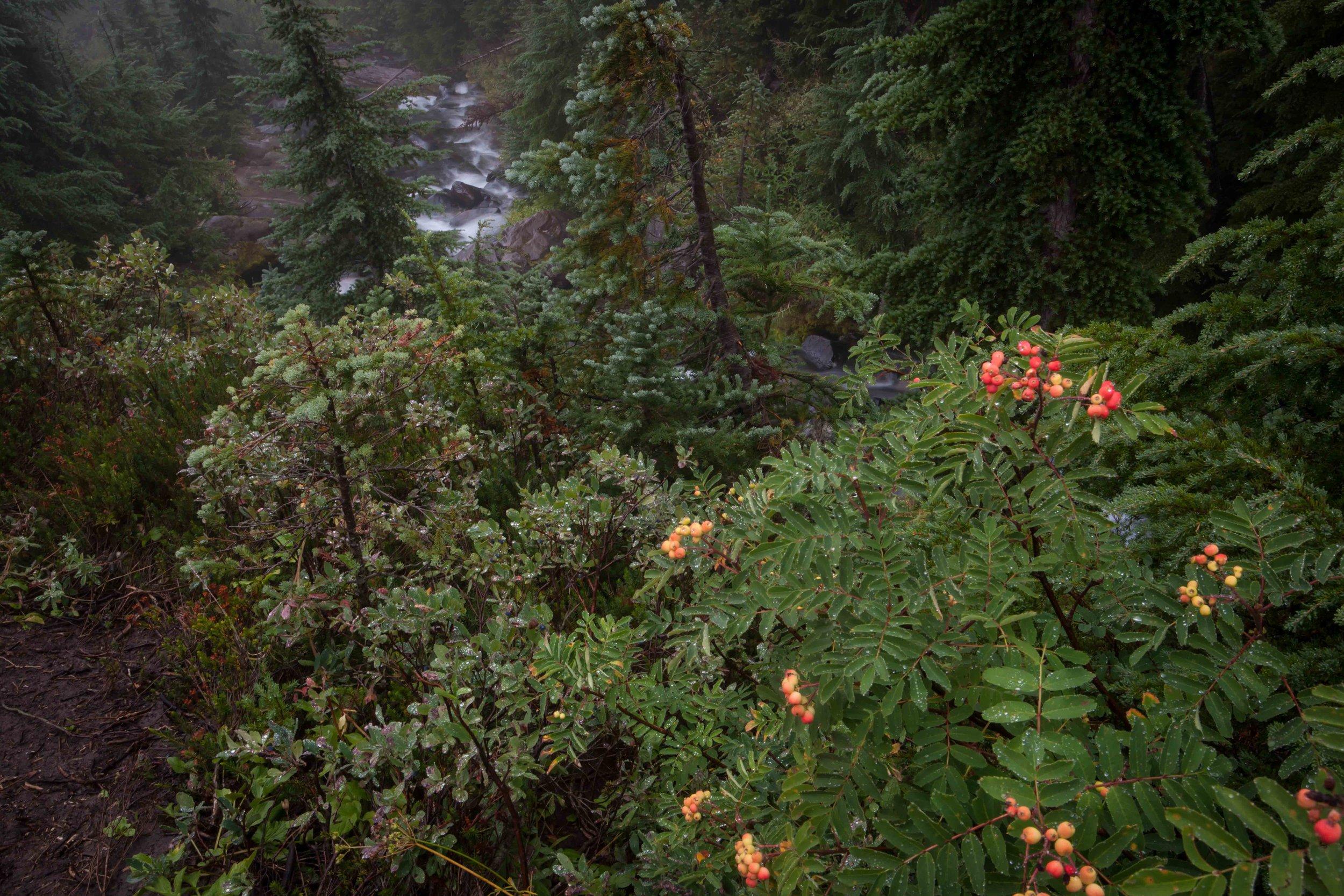 Mt Raineer 1-2.jpg