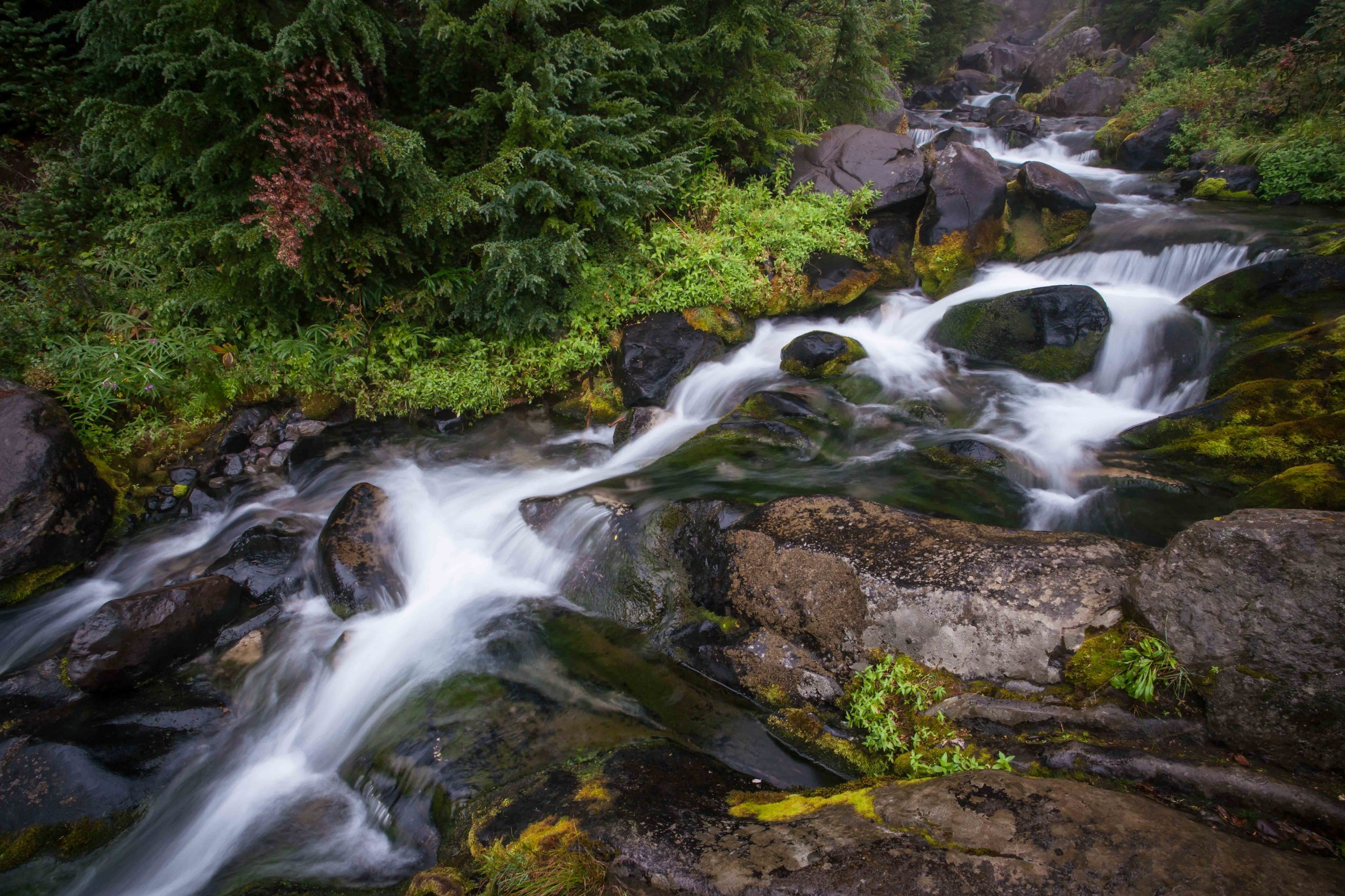 Mt Raineer 1-8.jpg