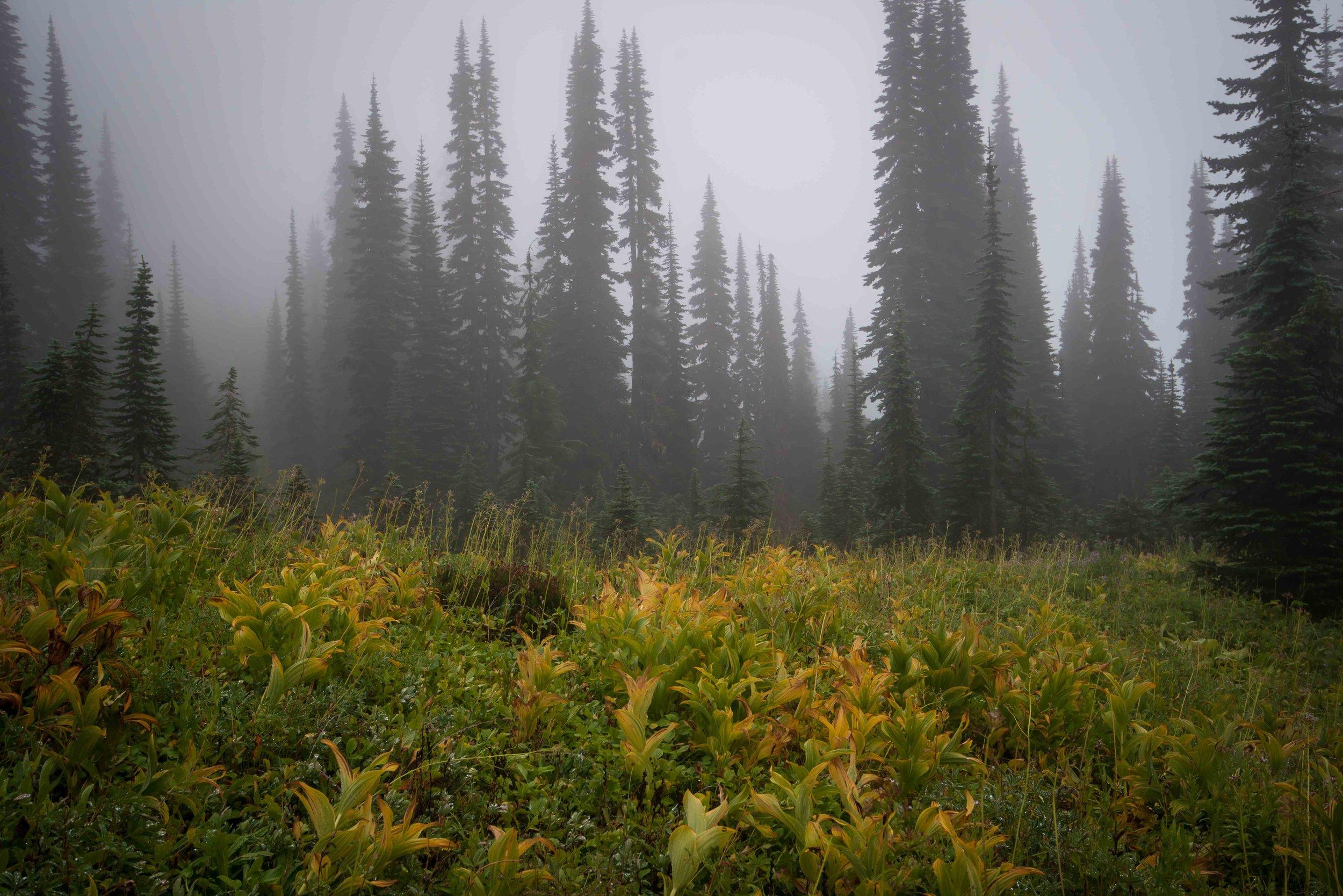 Mt Raineer 1-10.jpg