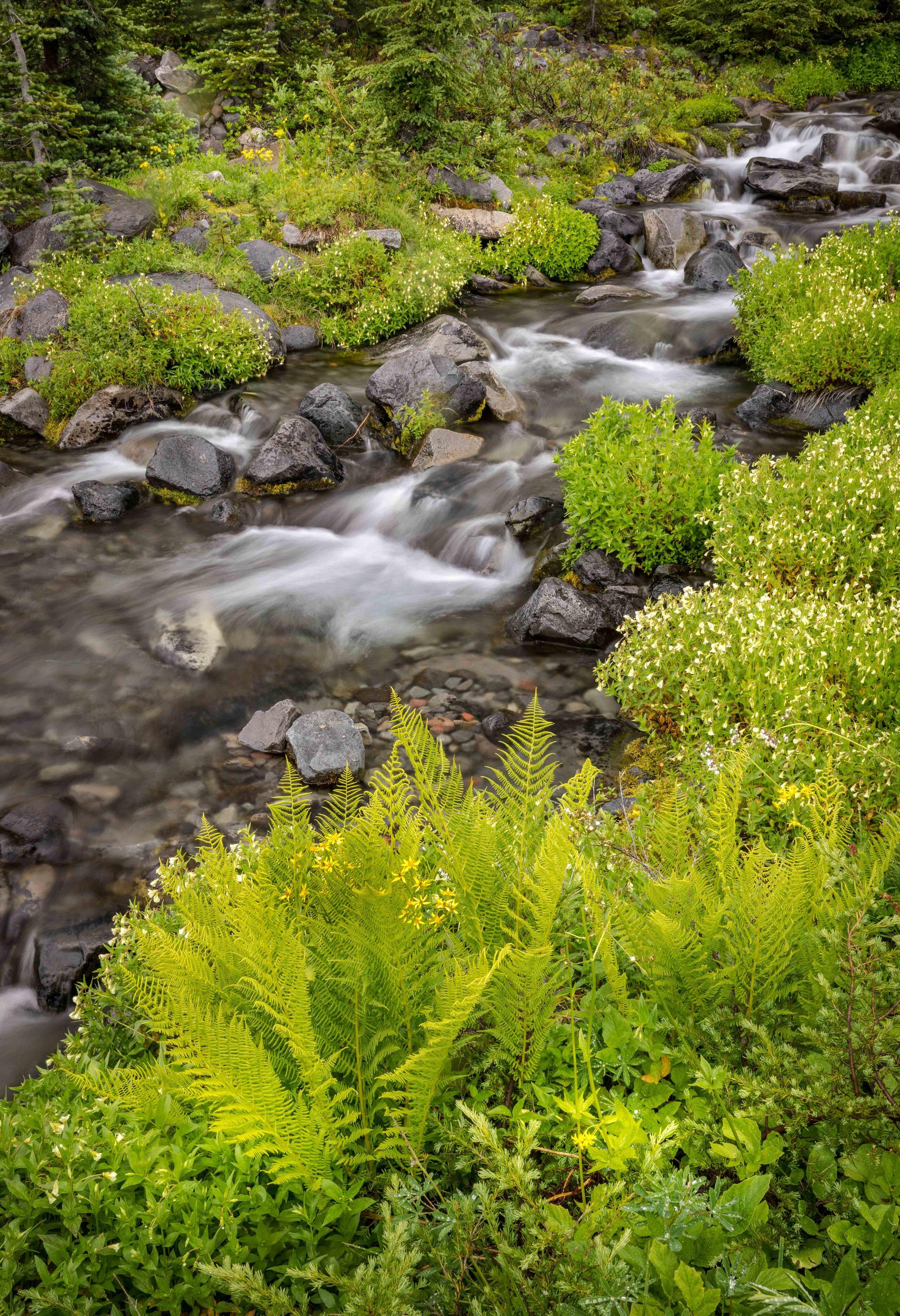 Mt Raineer 20-13.jpg