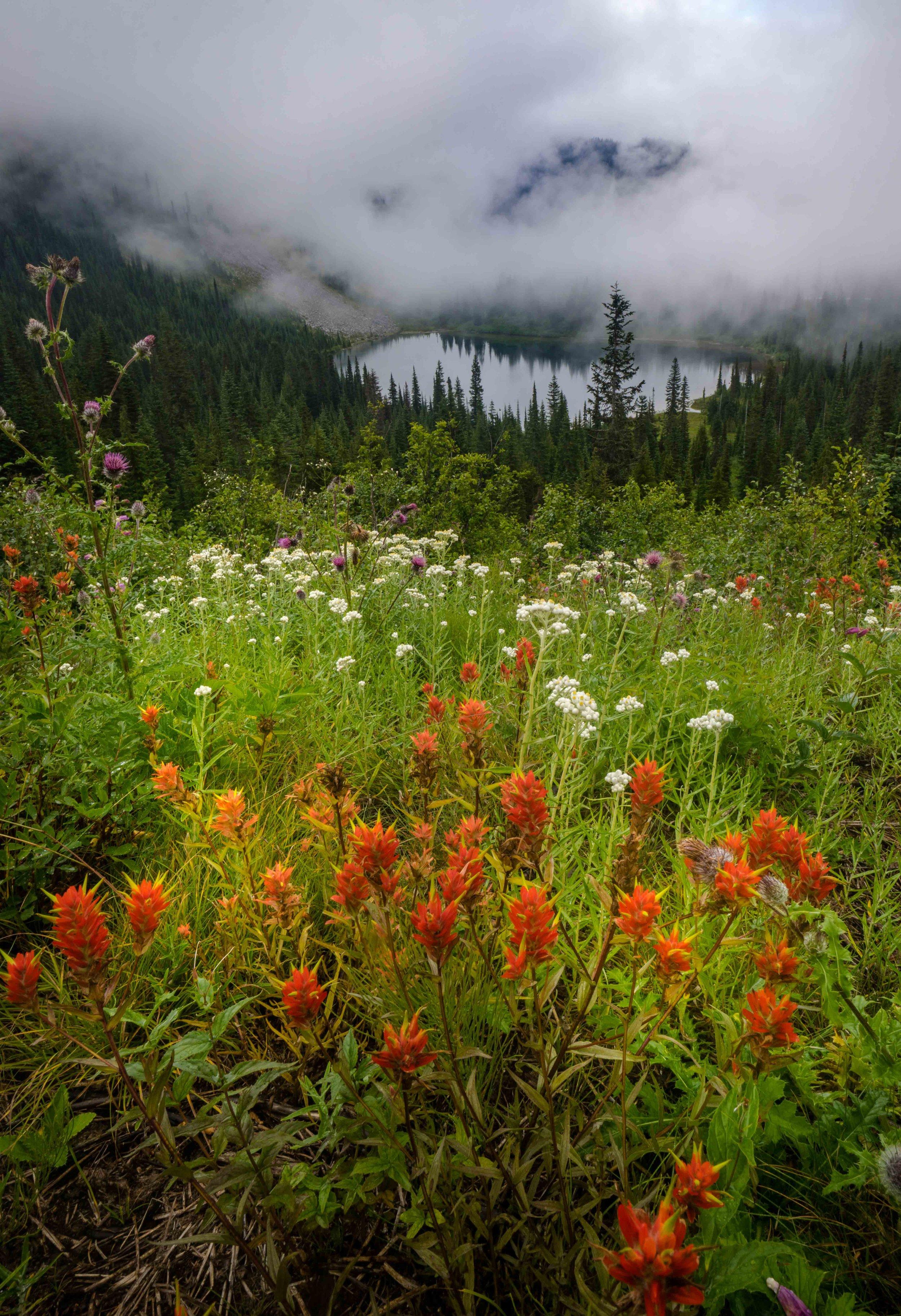 Mt Raineer 20-3.jpg