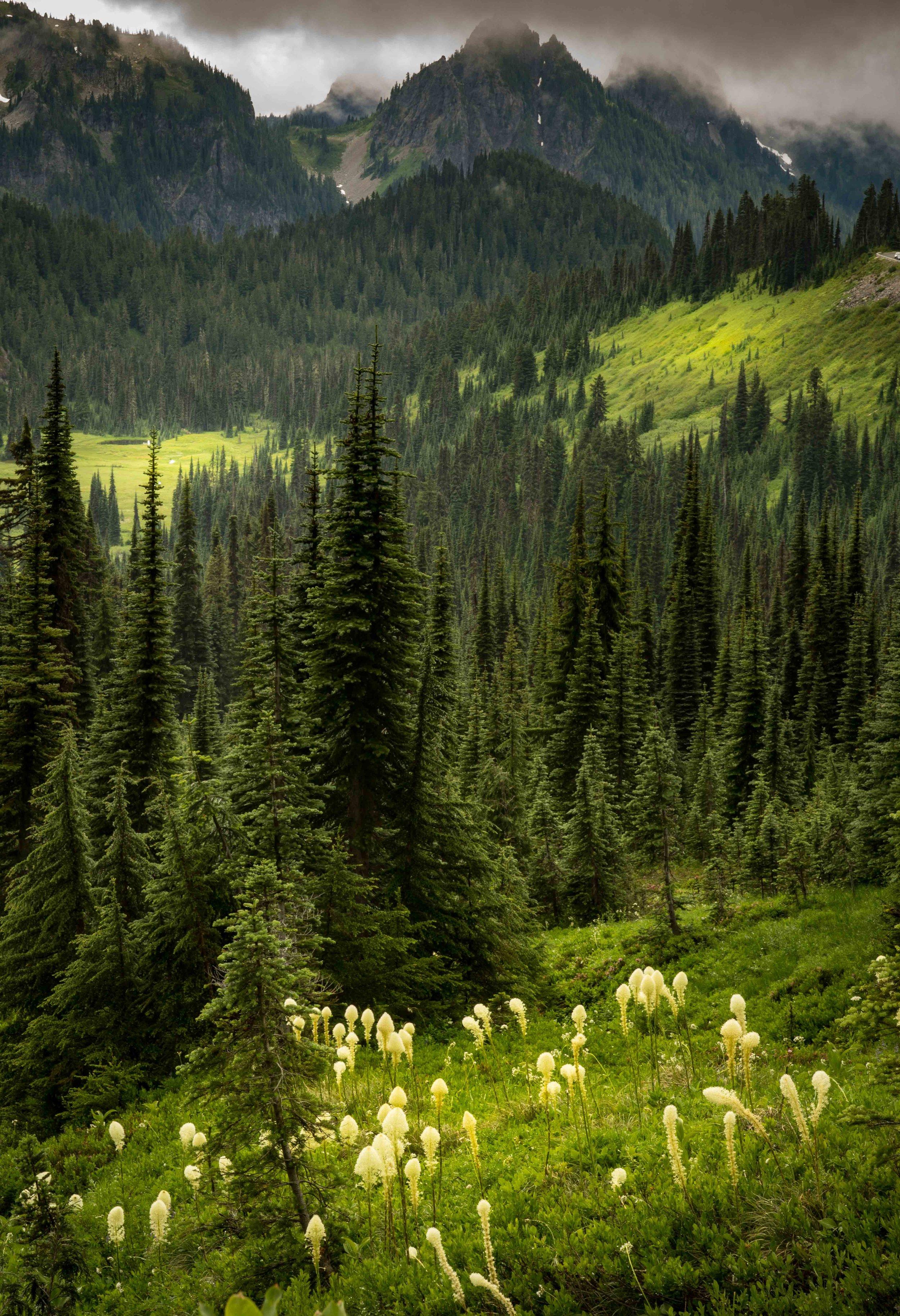 Mt Raineer 20-5.jpg