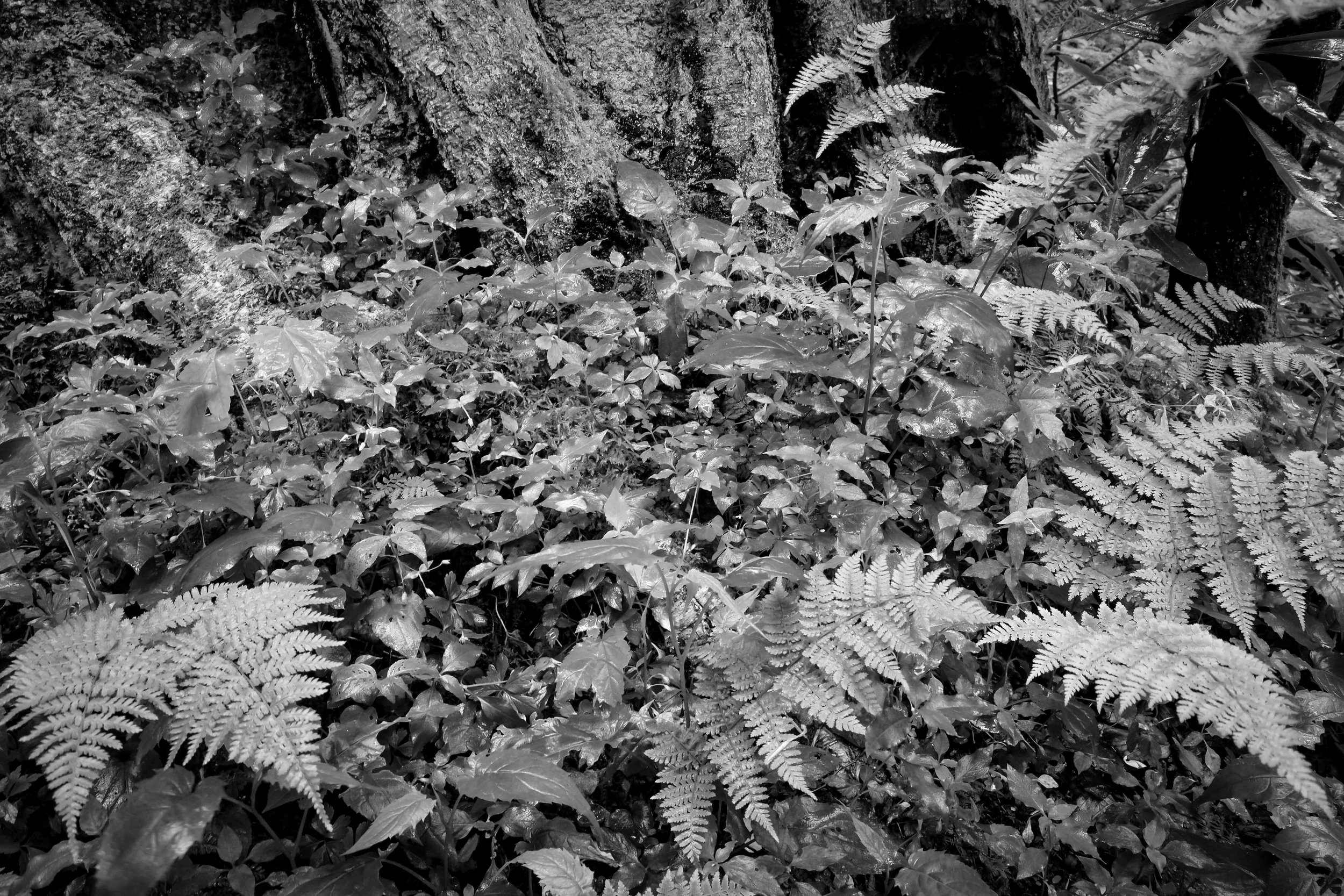 Monochrome 9-7.jpg
