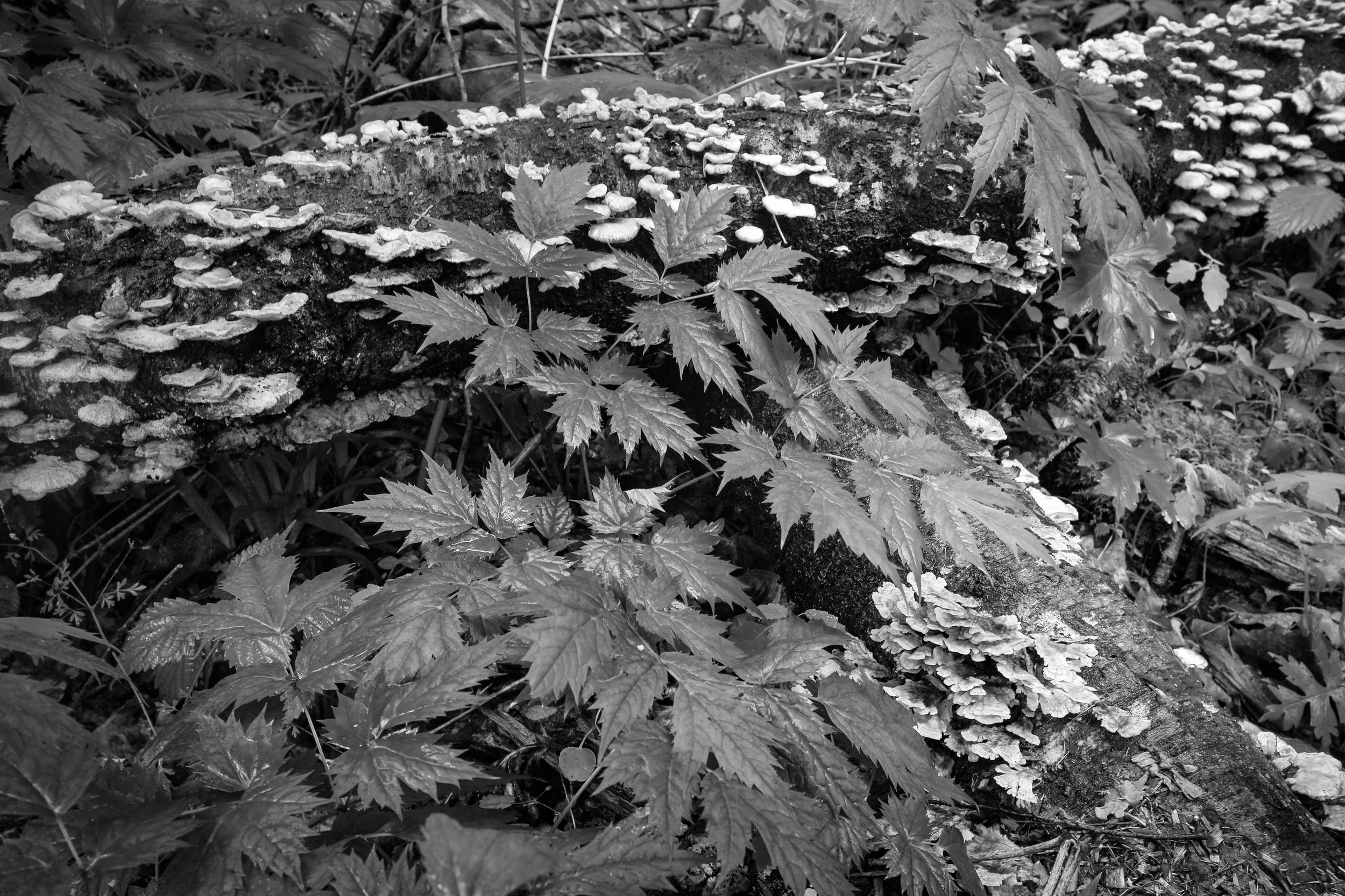 Monochrome 9-8.jpg