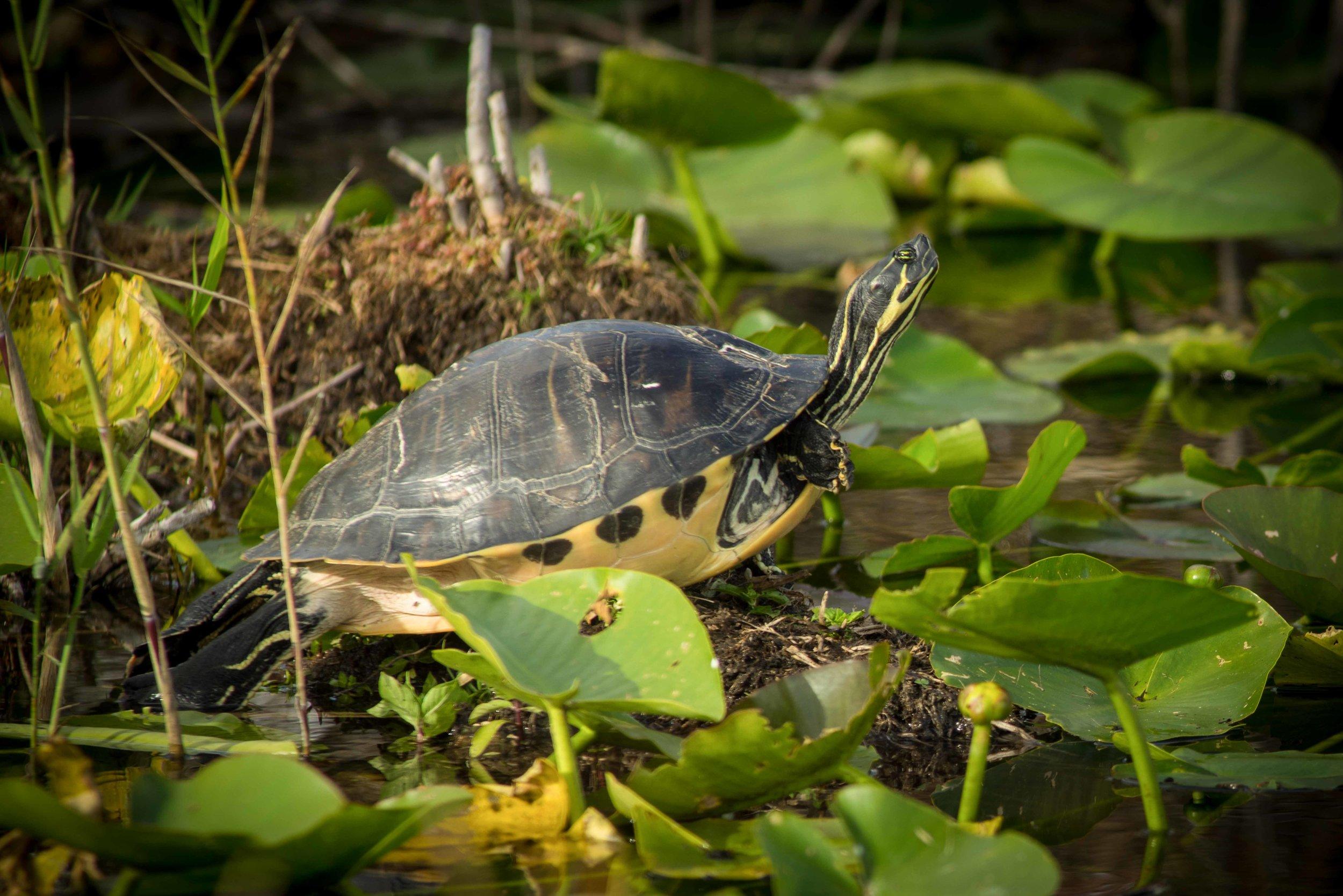 Everglades 2018.jpg