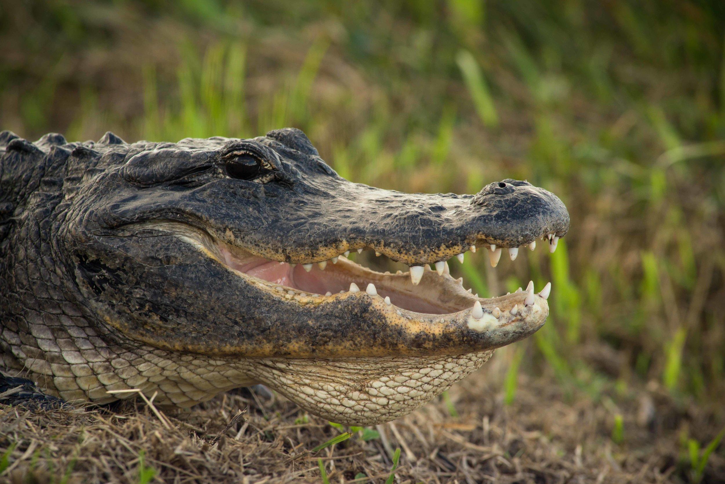 Everglades 2018-3.jpg