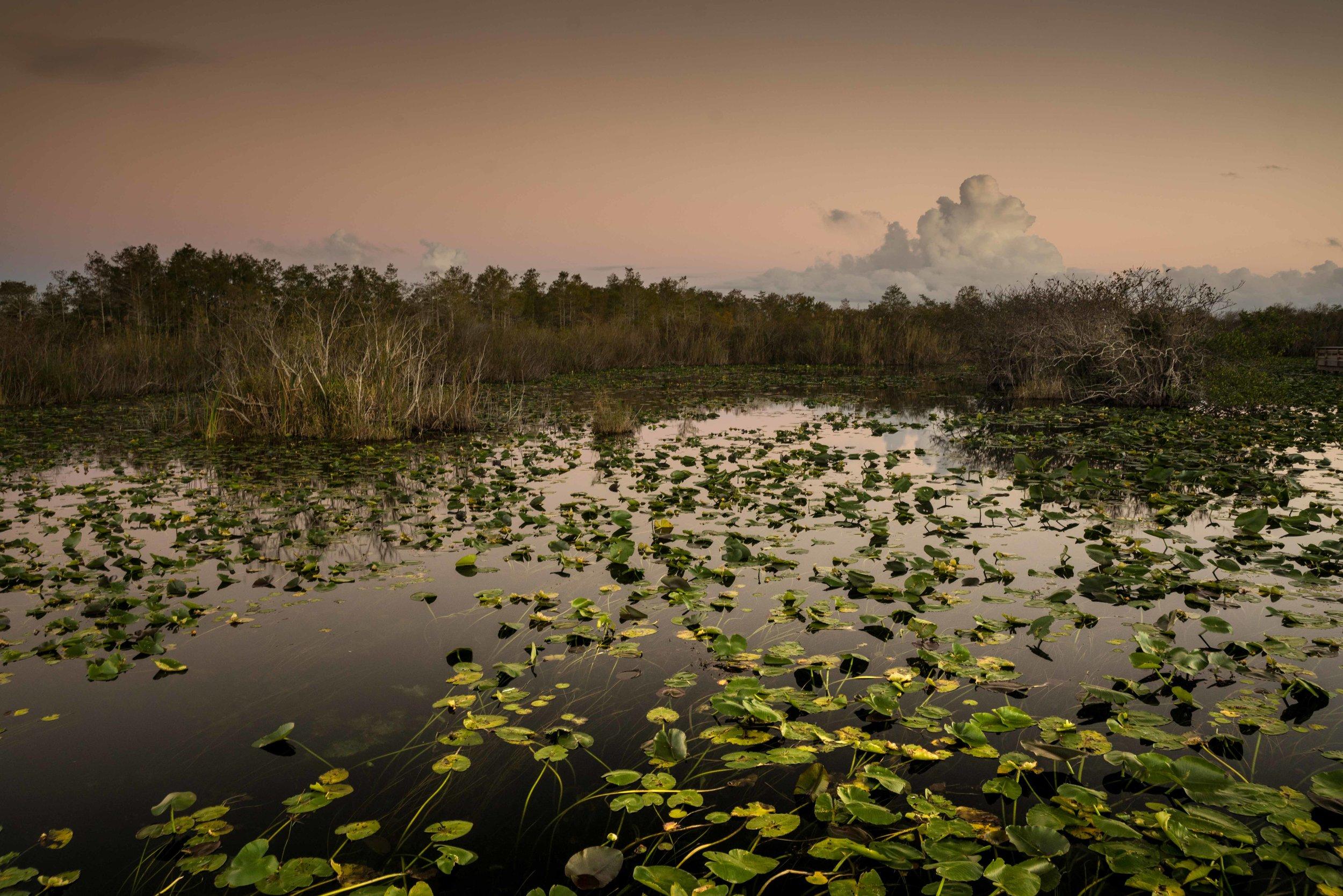 Everglades 2018-4.jpg