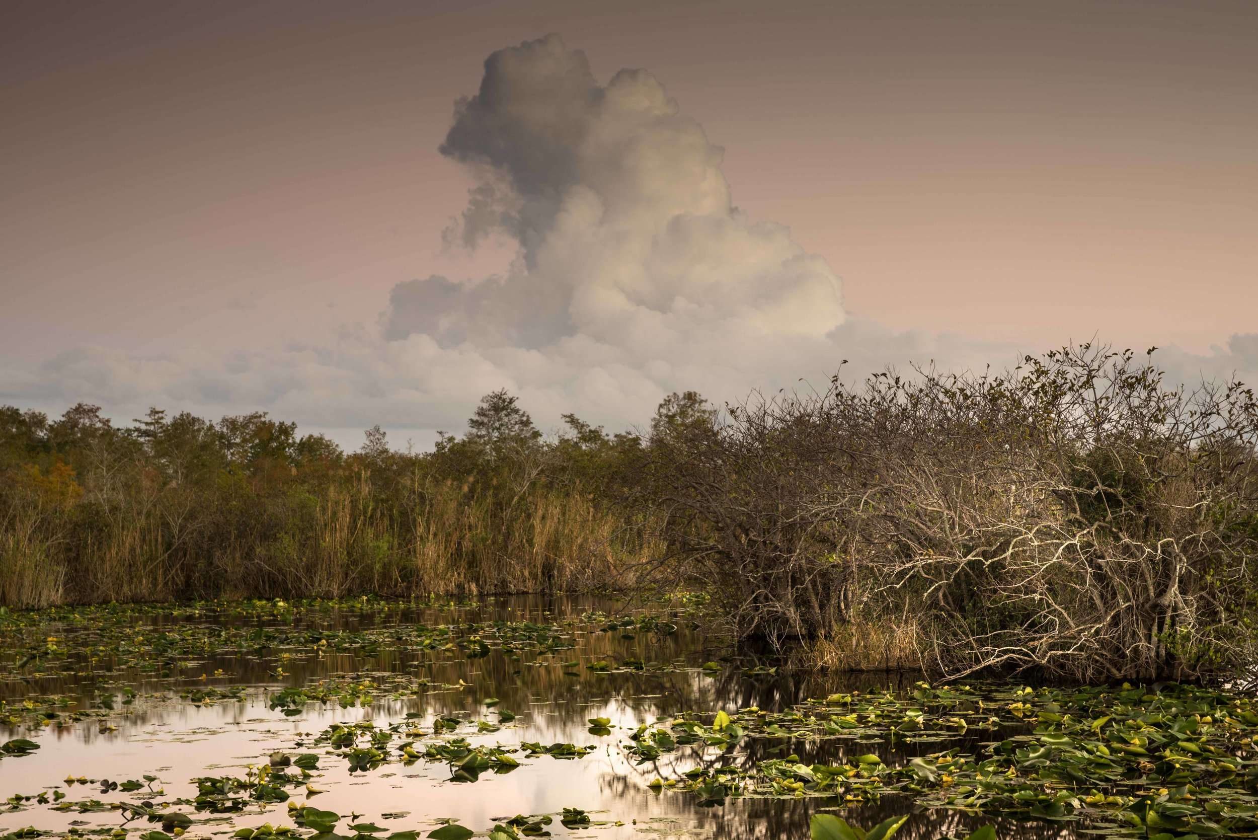Everglades 2018-5.jpg