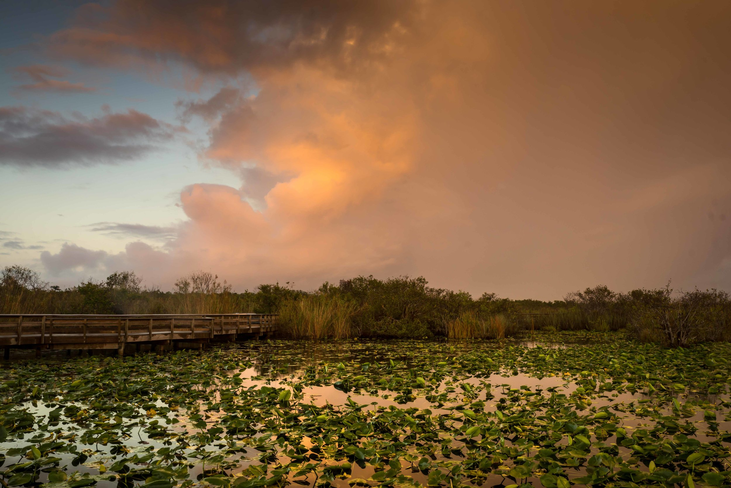 Everglades 2018-7.jpg