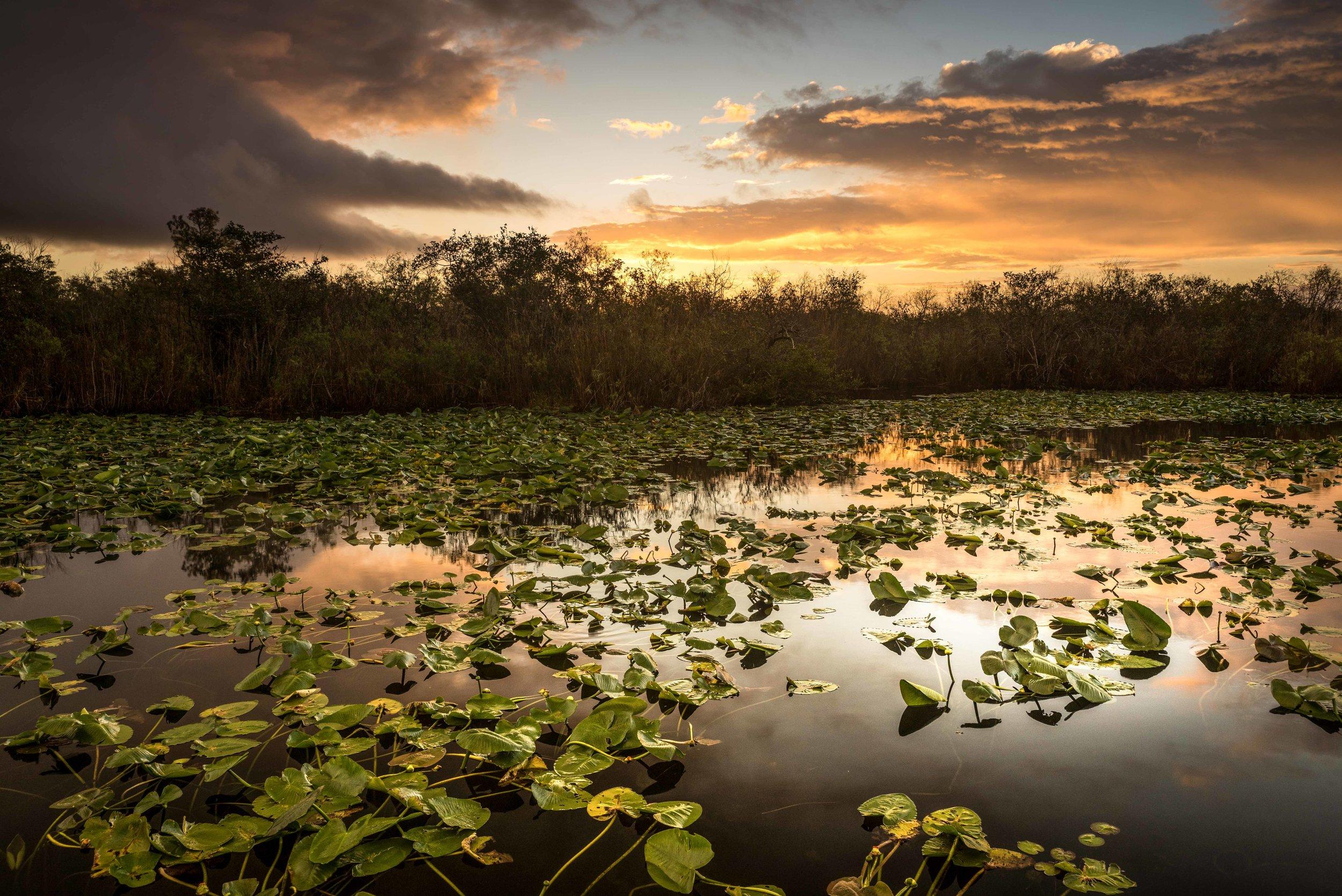 Everglades 2018-6.jpg