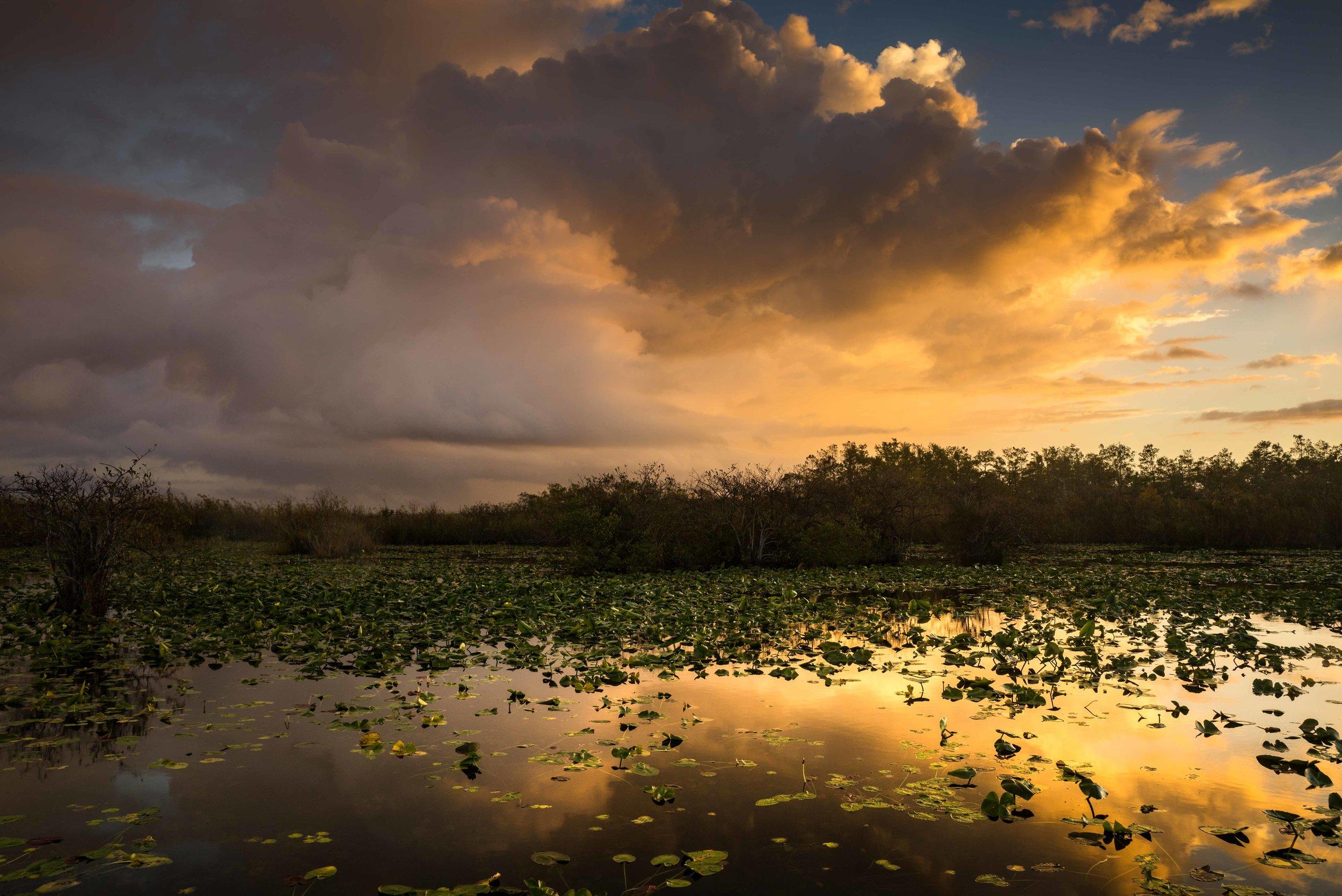 Everglades 2018-8.jpg