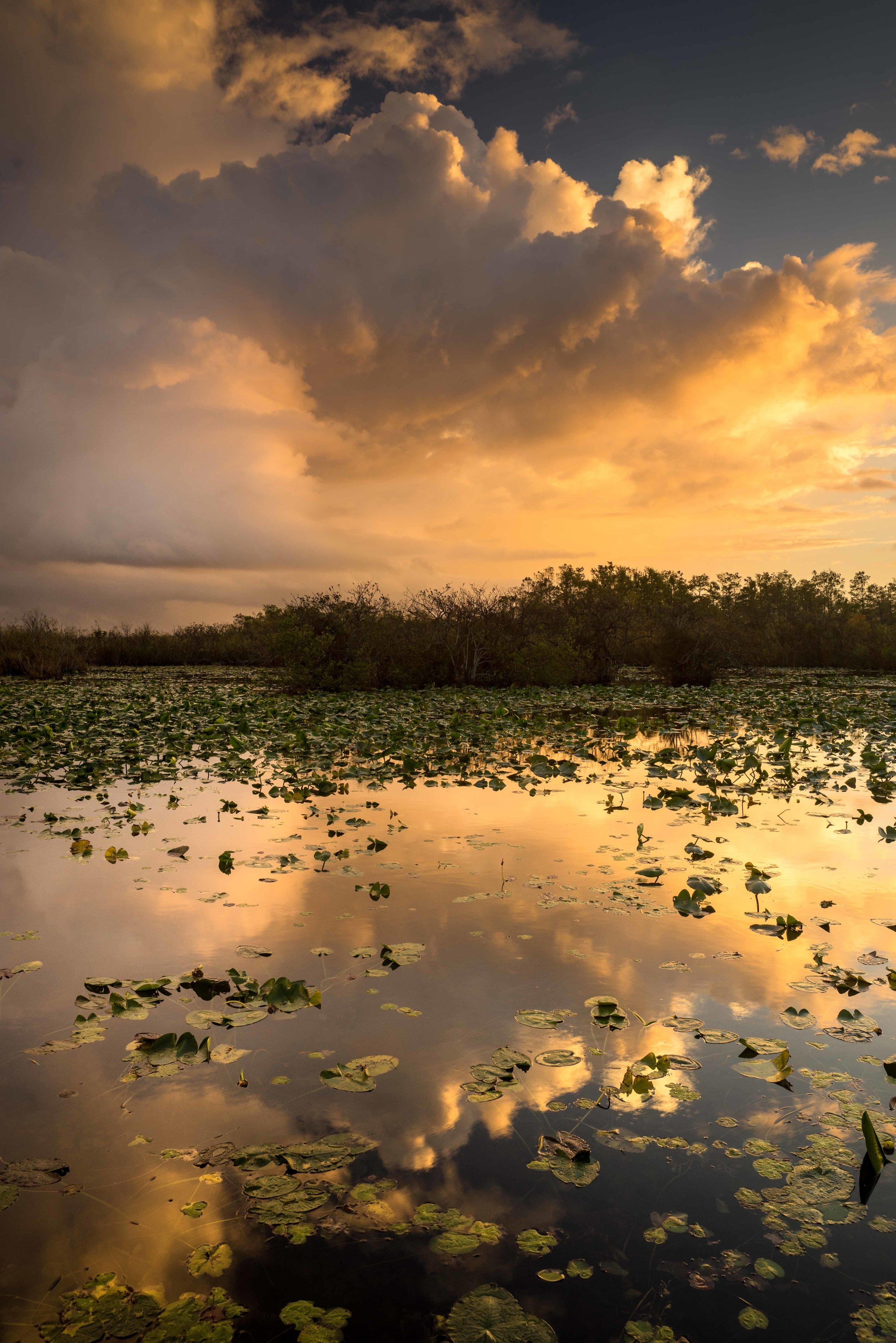 Everglades 2018-9.jpg