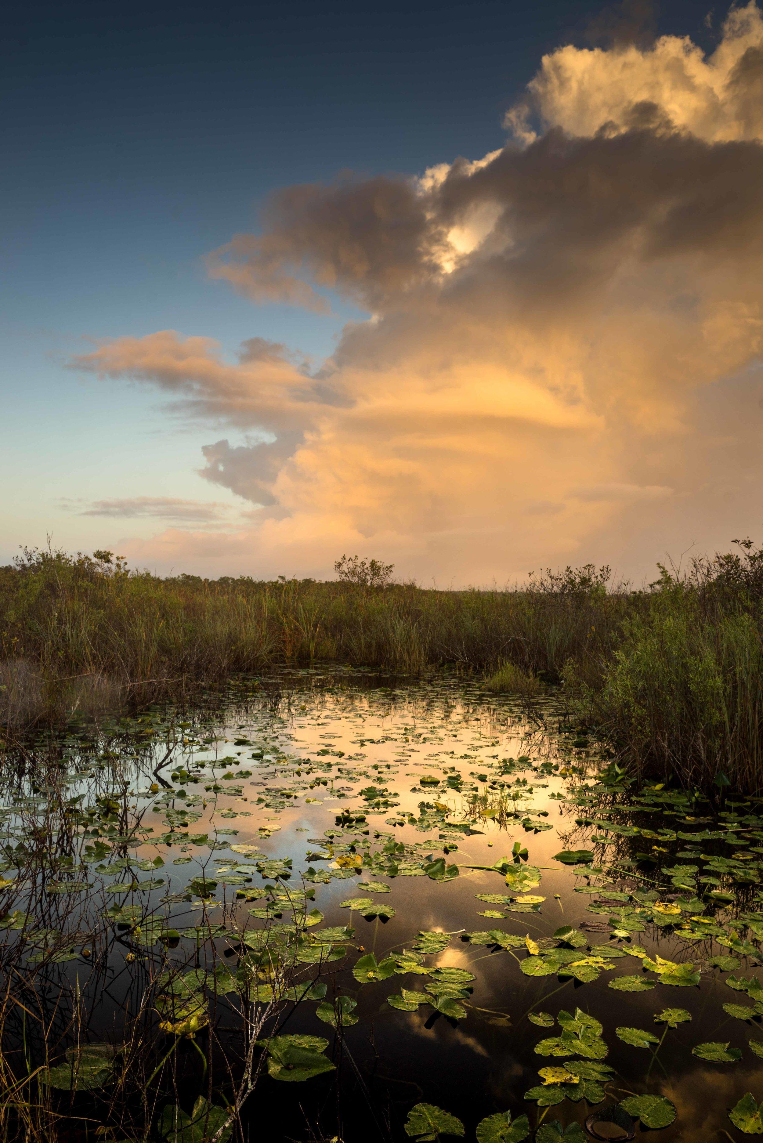 Everglades 2018-11.jpg