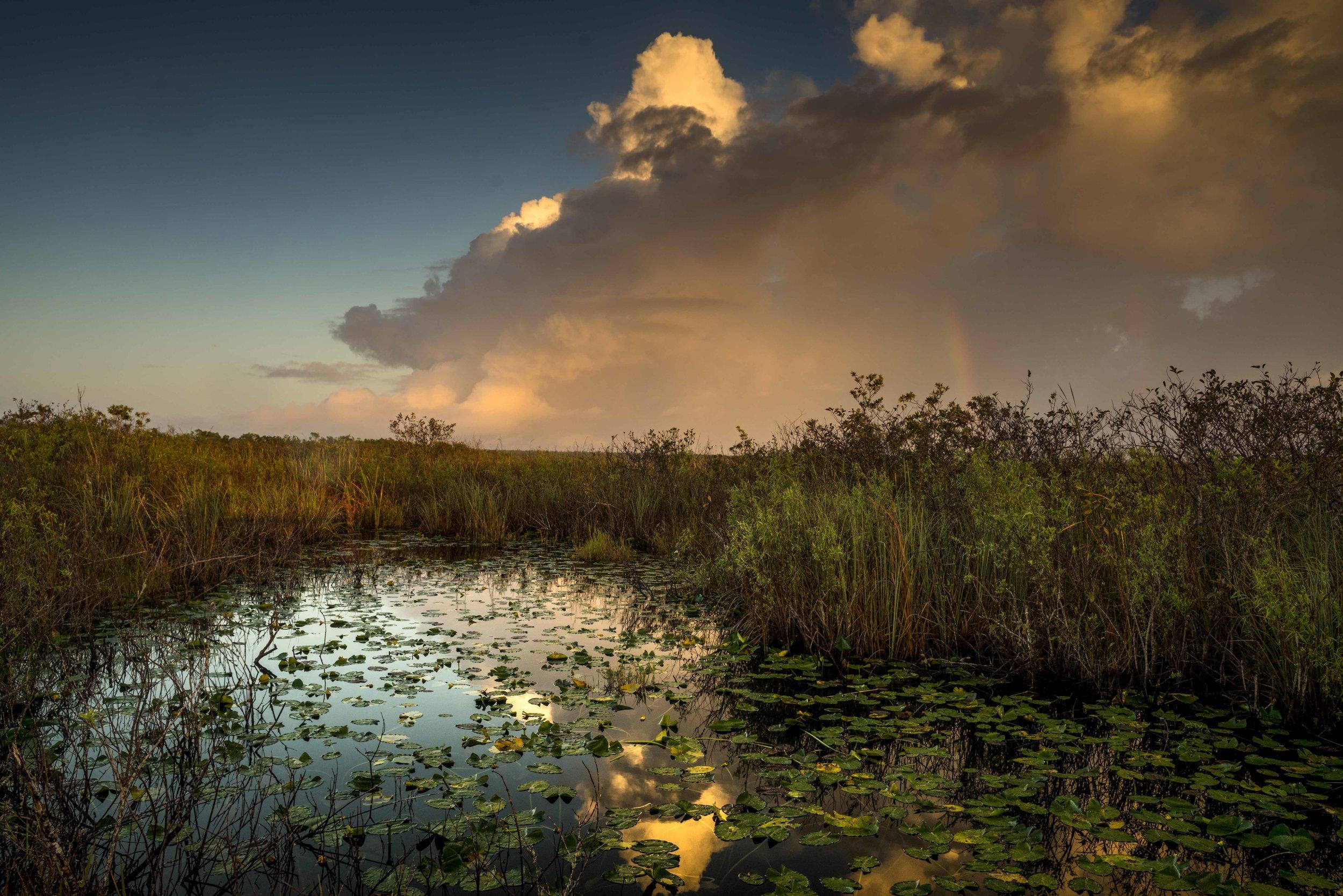 Everglades 2018-12.jpg