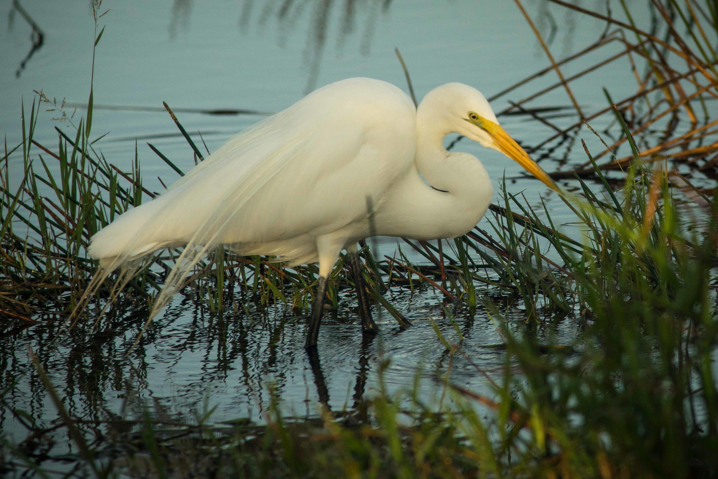 Everglades 2018-13.jpg