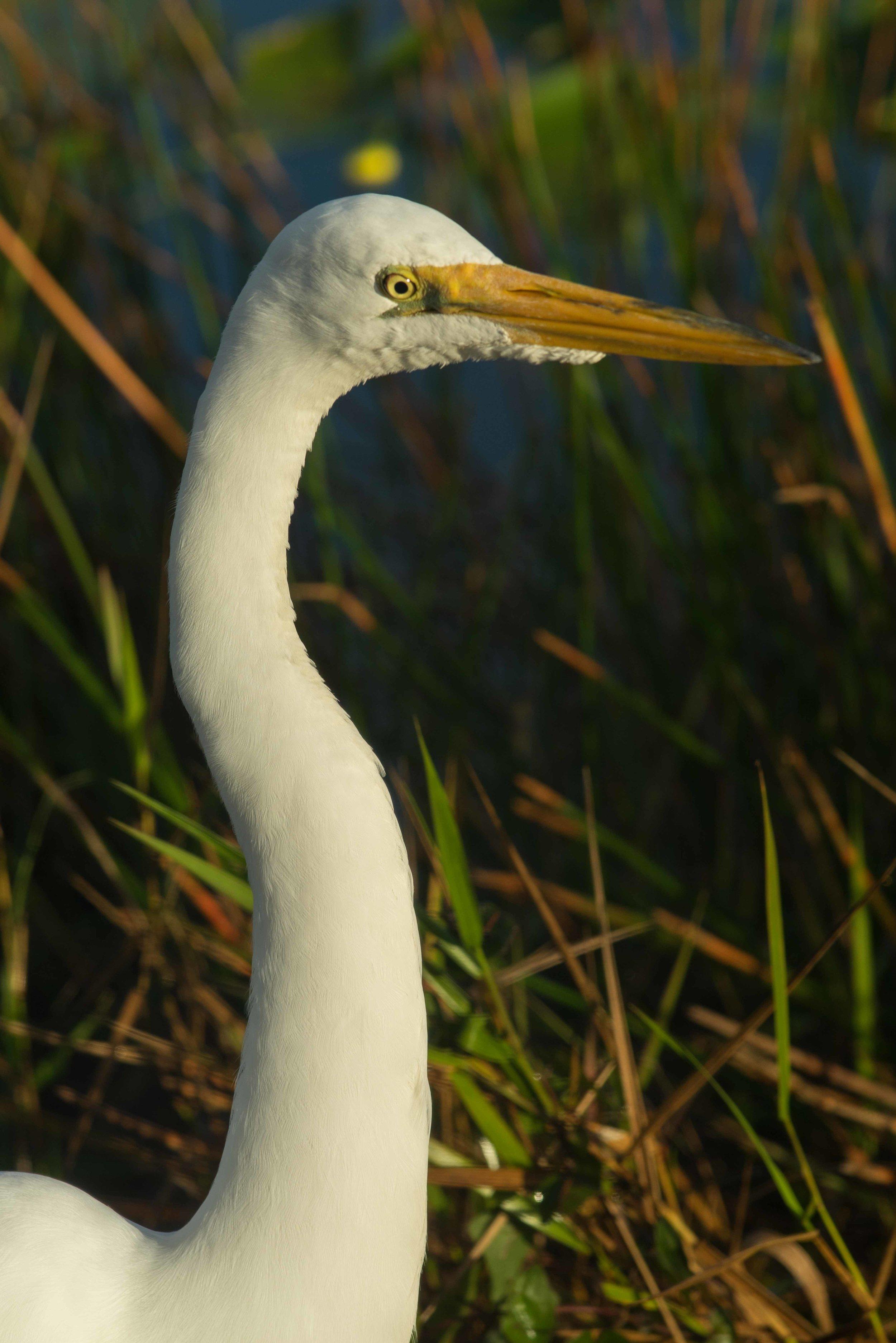 Everglades 2018-15.jpg
