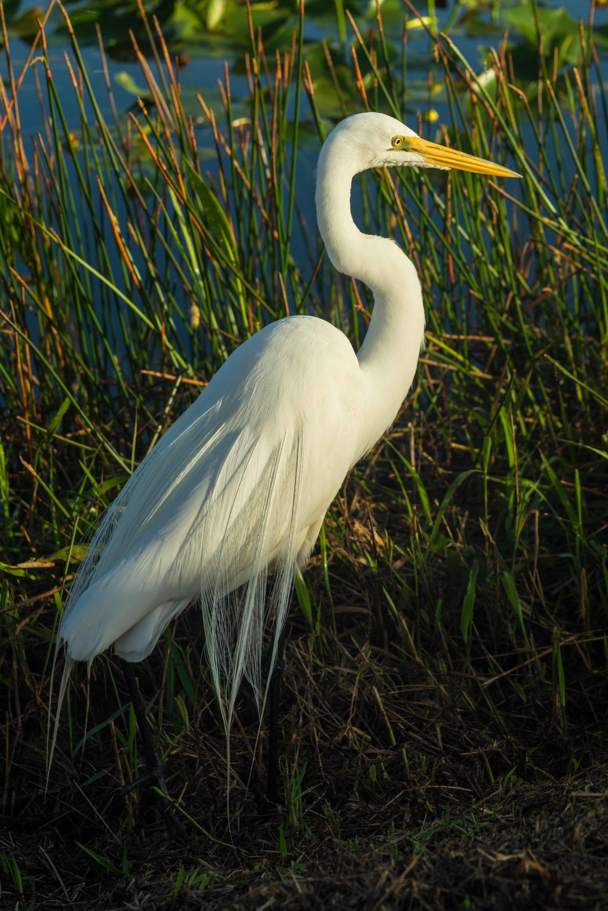 Everglades 2018-14.jpg