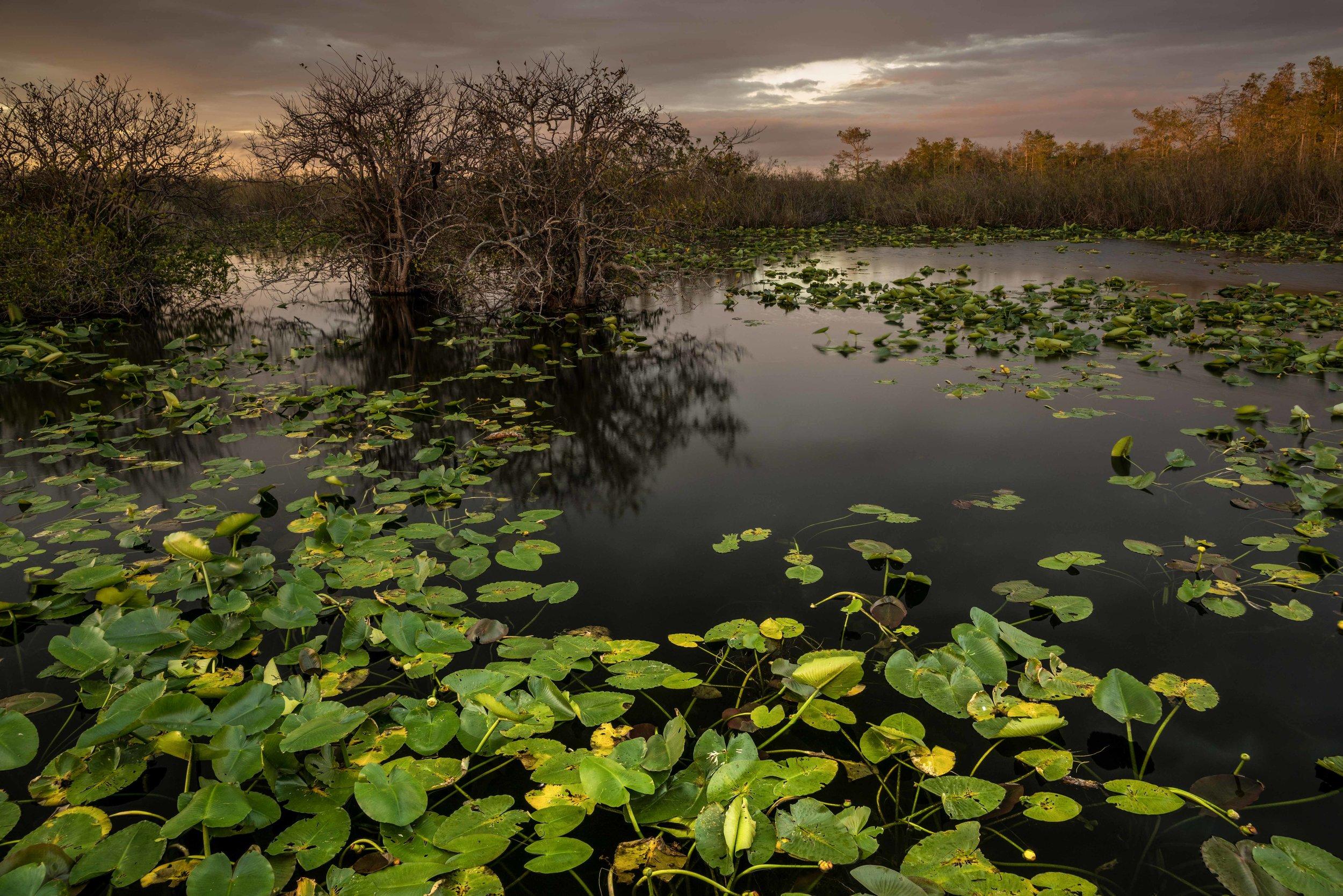 Everglades 2018-19.jpg