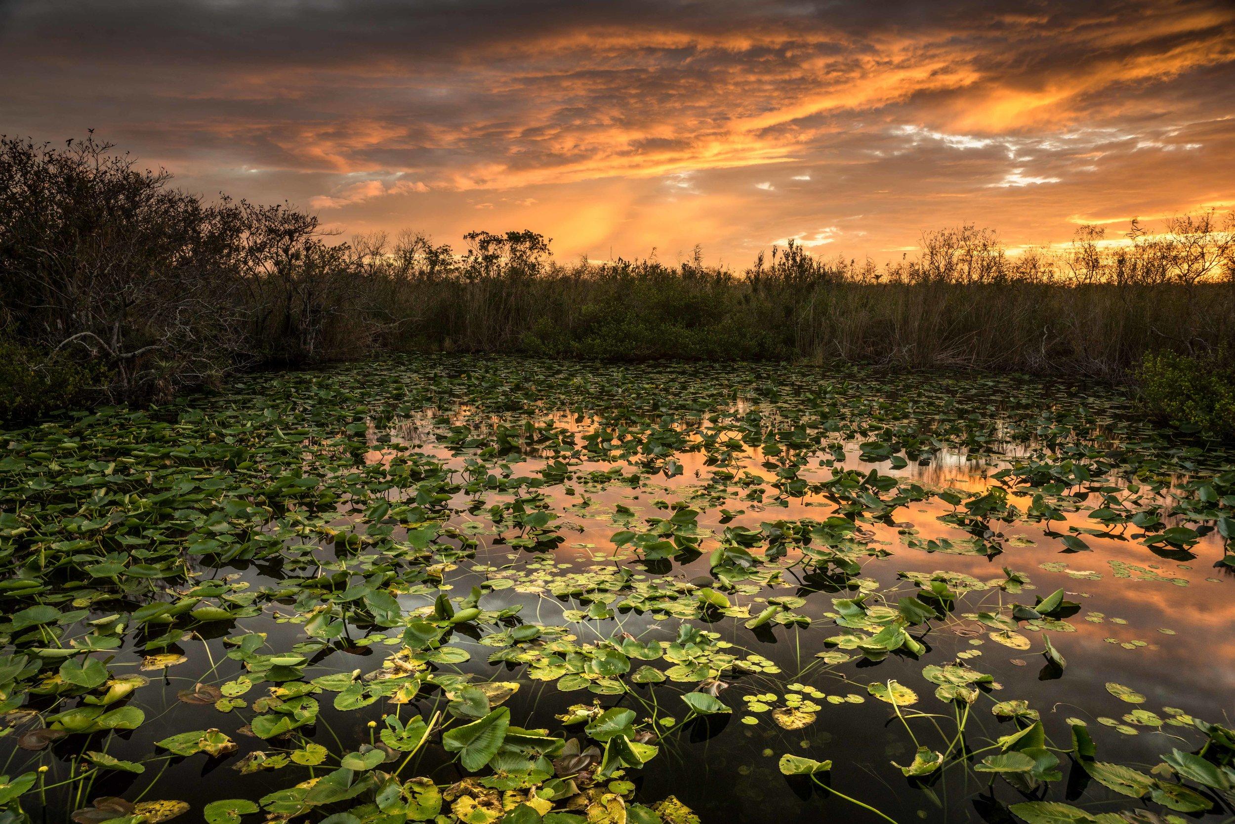Everglades 2018-21.jpg