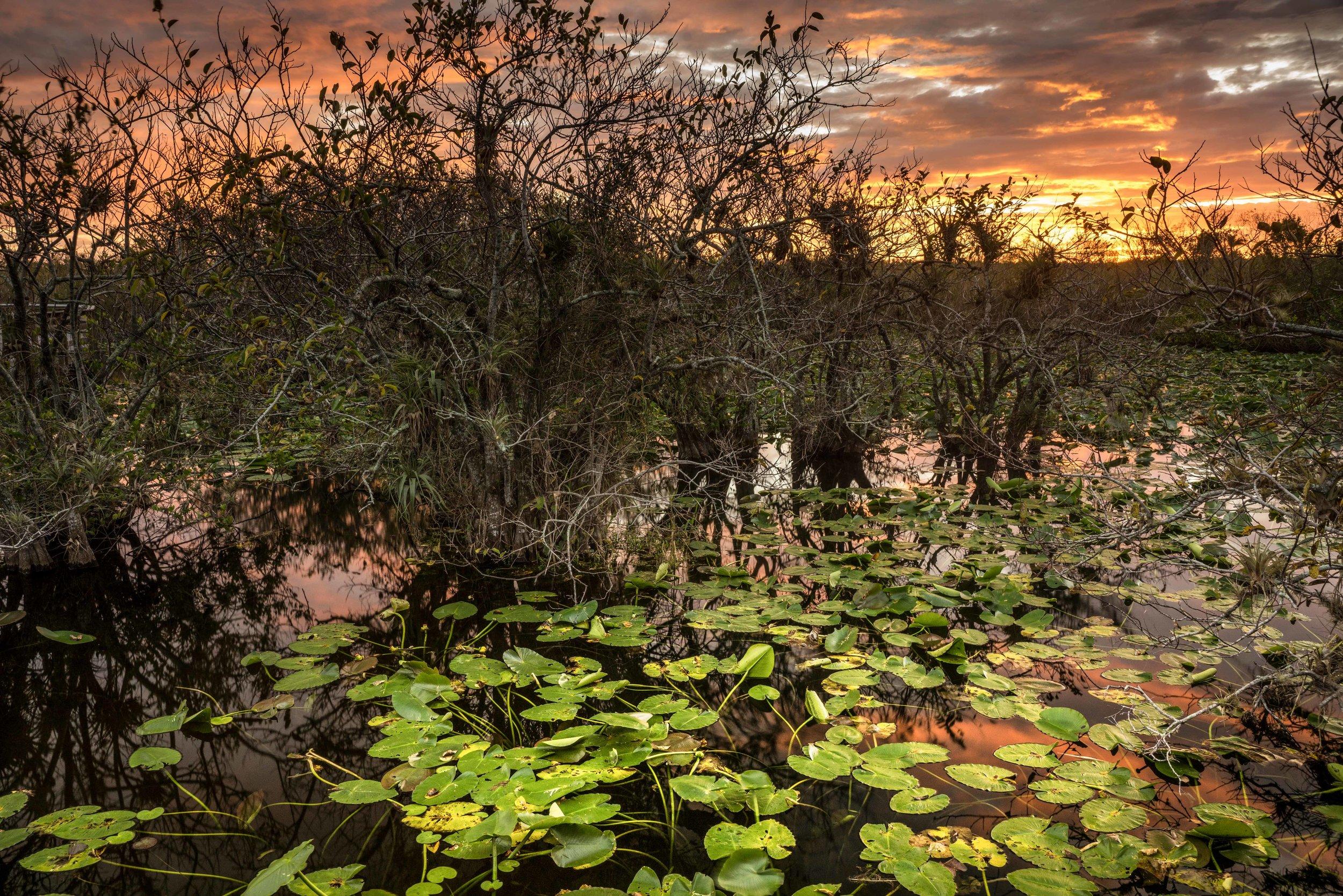Everglades 2018-22.jpg