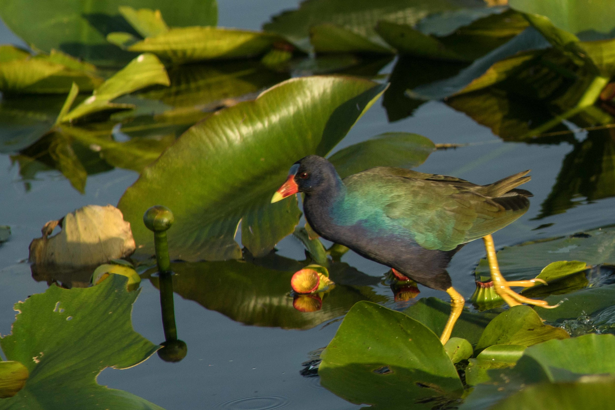 Everglades 2018-25.jpg