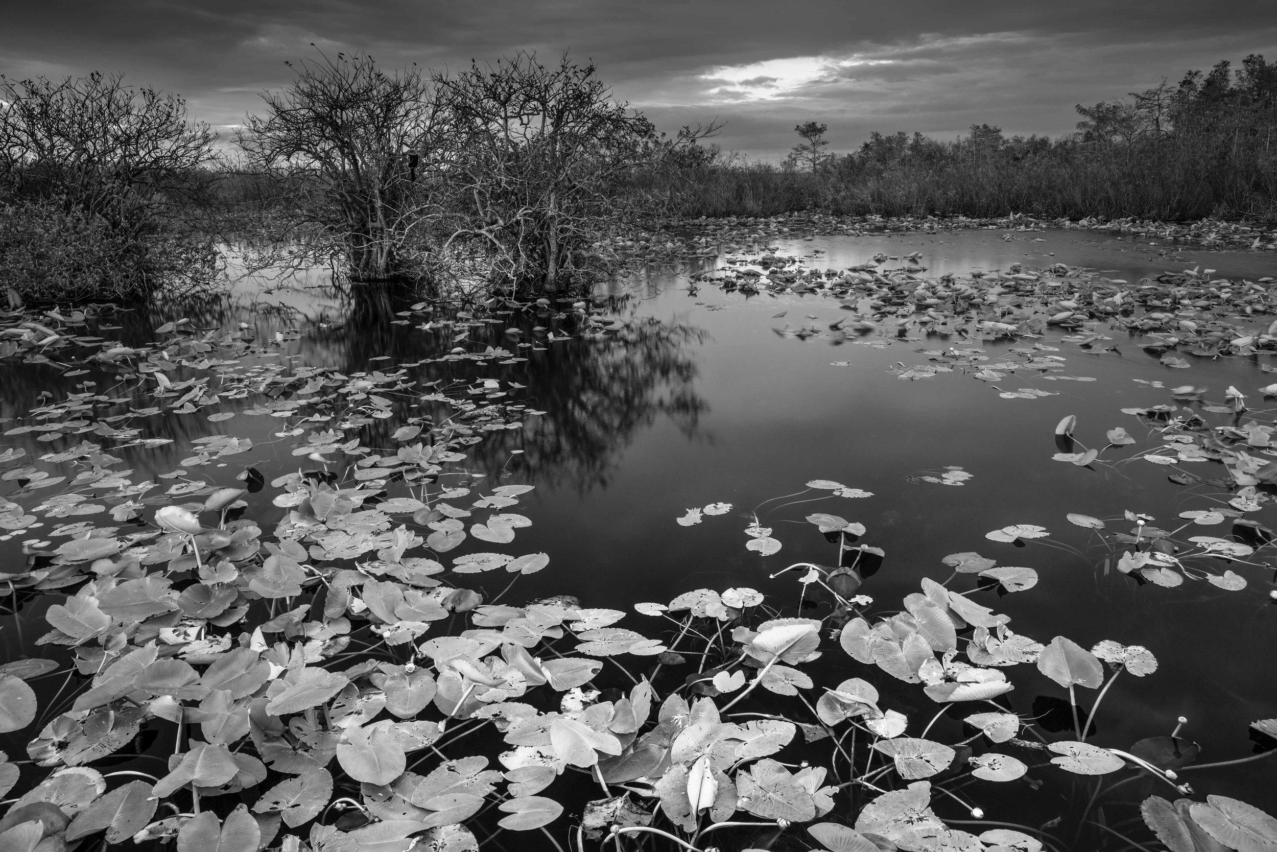 Everglades 2018-20.jpg
