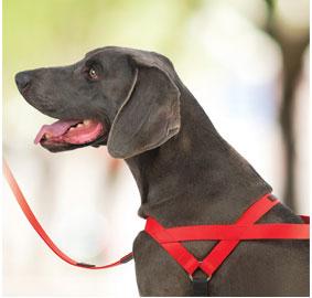 freedom-harnesses-dog.jpg