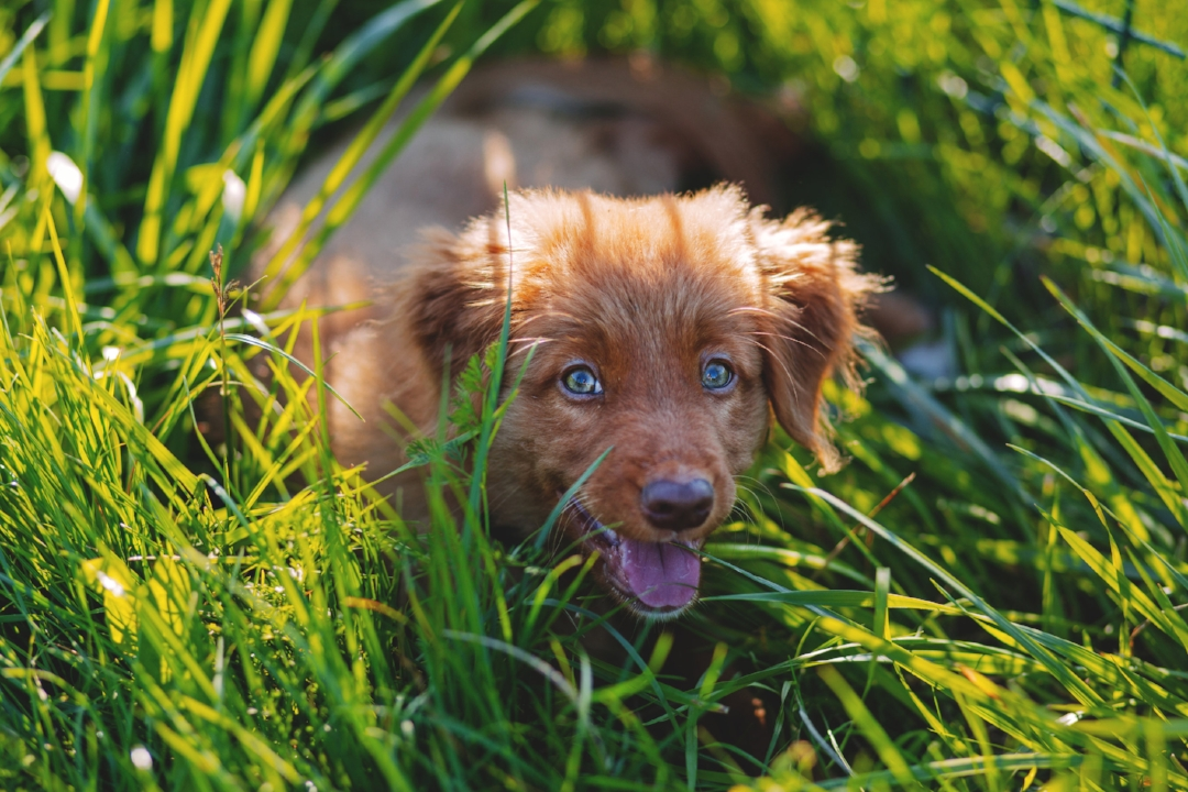 Thinking of getting a puppy? -