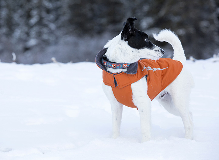Cascade Orange and clip collar - on dog - LO RES.jpg